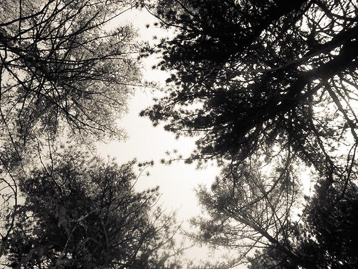Trees by Berka swan