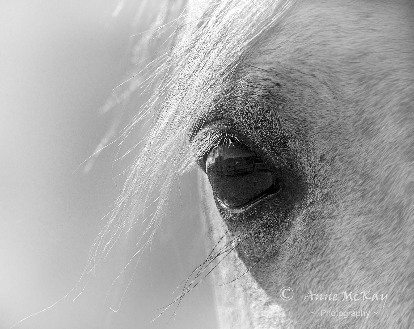 Arabian Eye by Anne McKay