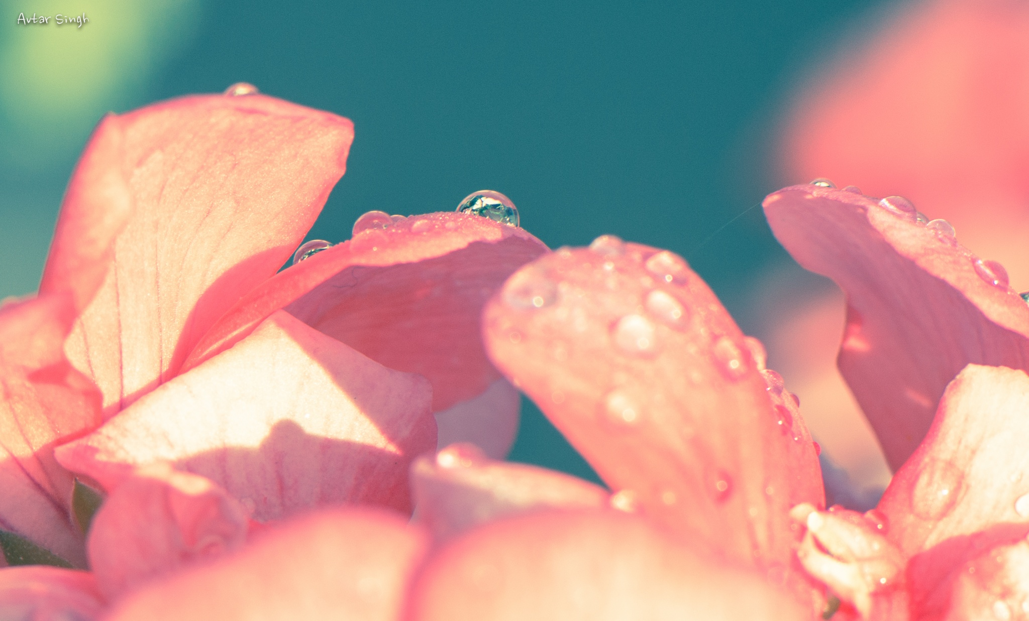 Without rain, there is no life. by Avtar Singh