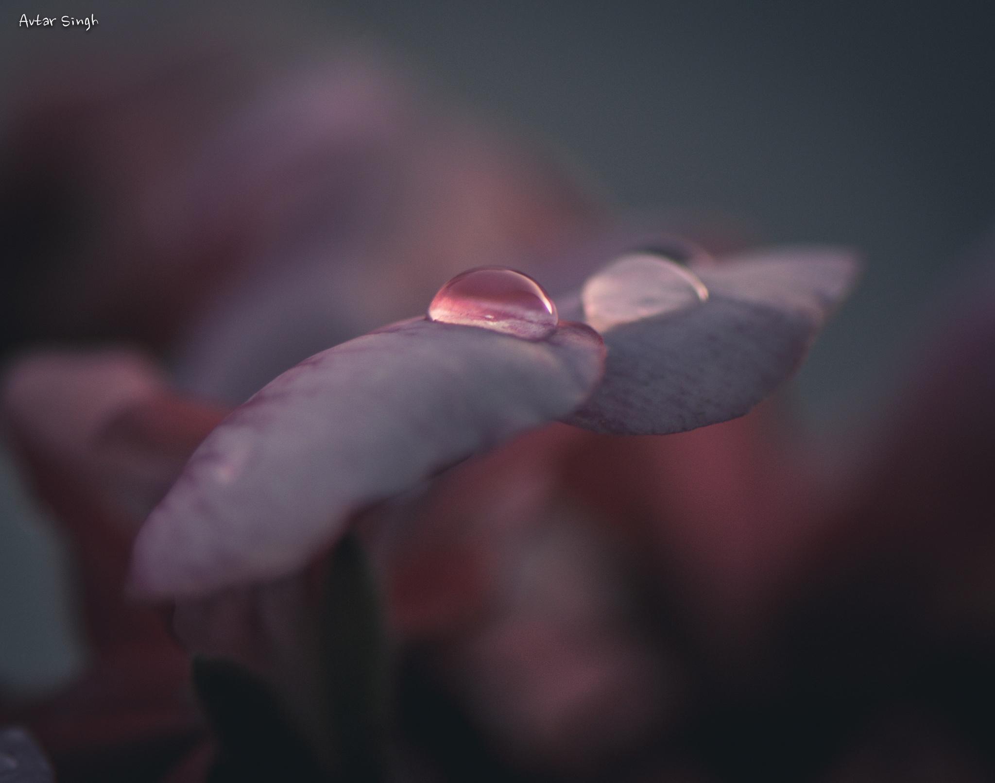 Twinkling Diamond by Avtar Singh