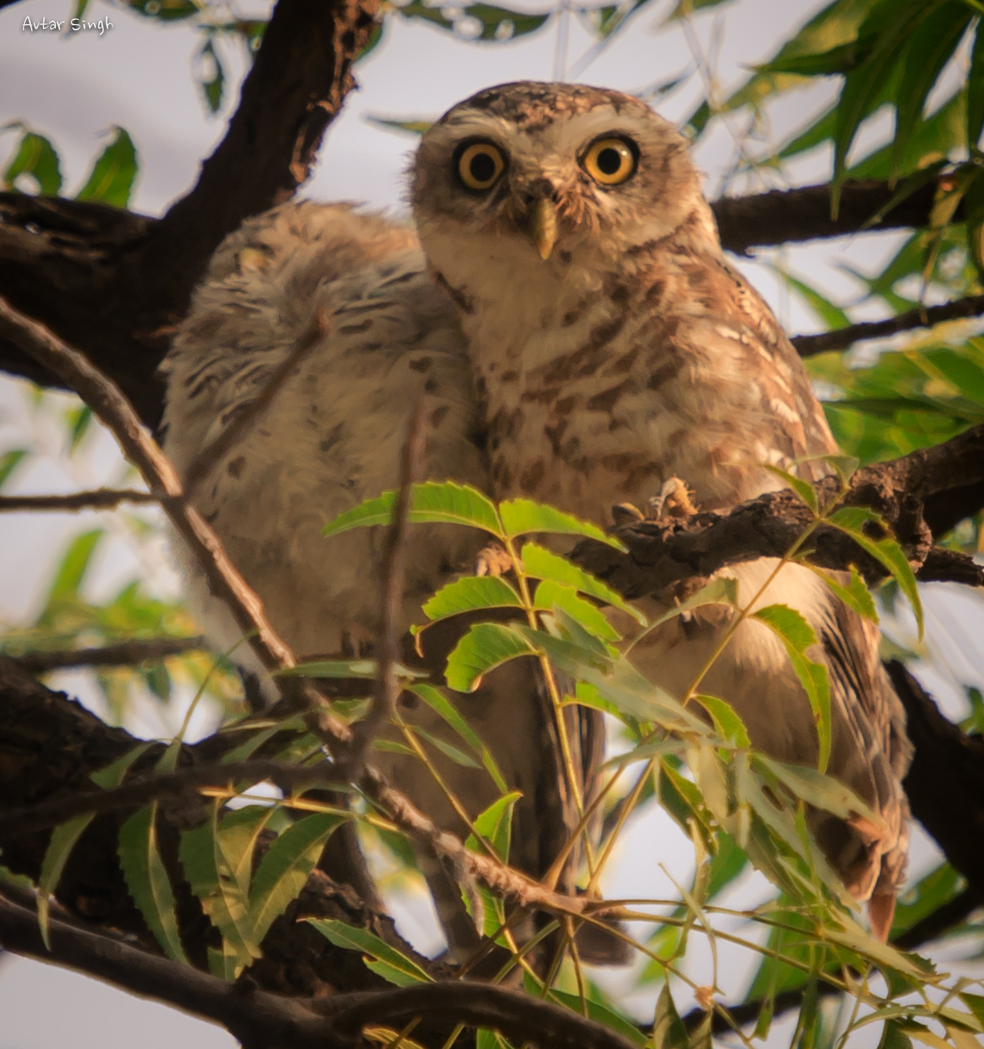 I am watching you  by Avtar Singh