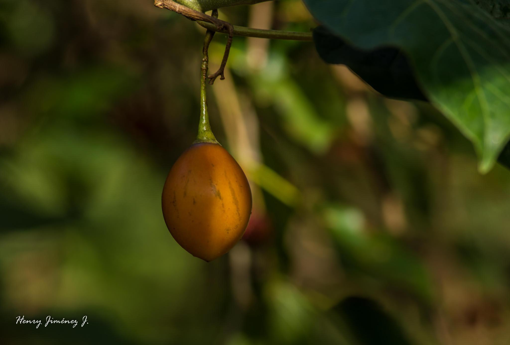 Tomate de árbol. by Henry Jiménez J