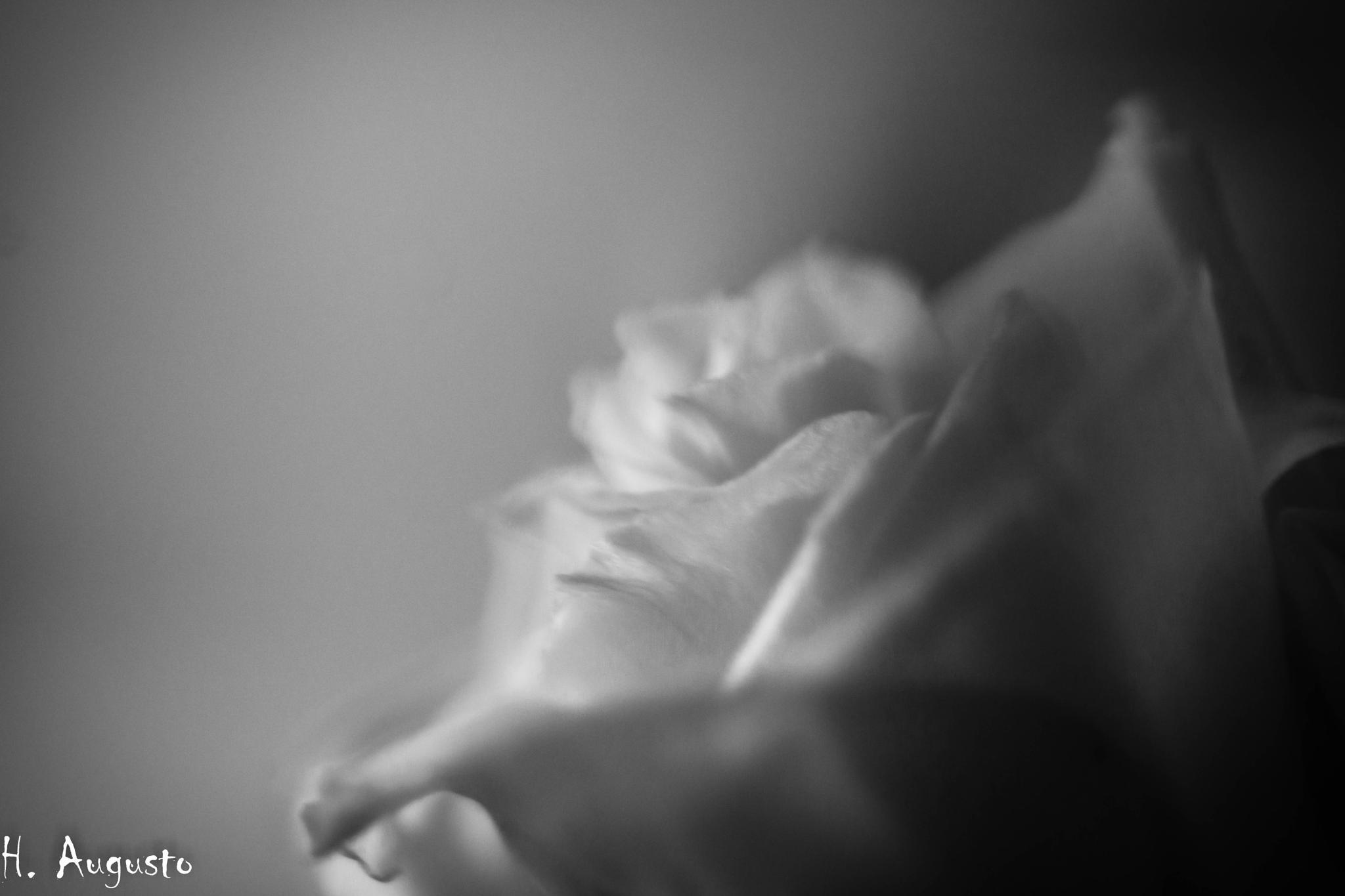 El nombre de la rosa. by Henry Jiménez J