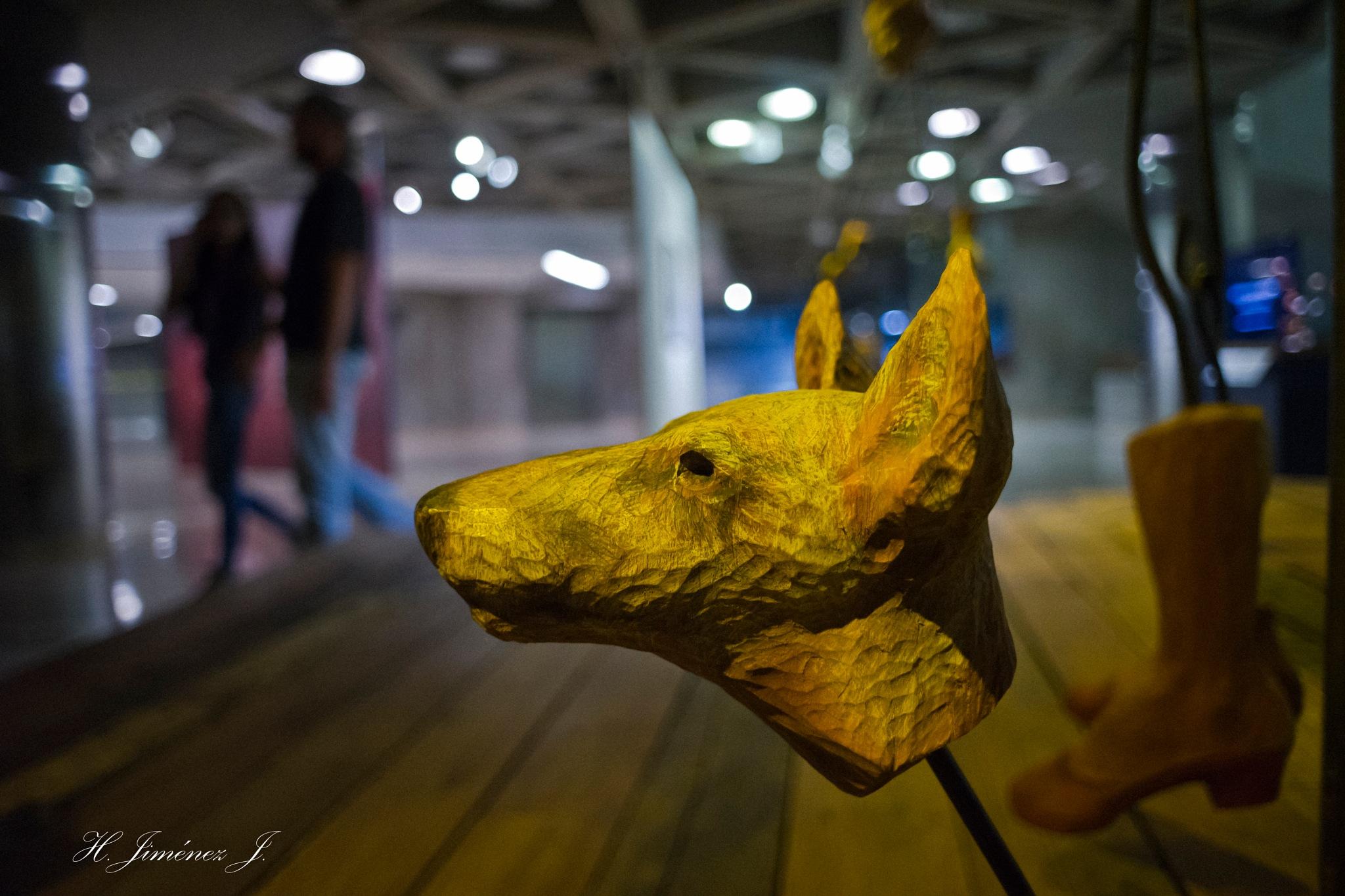 Perro sin cuerpo! by Henry Jiménez J