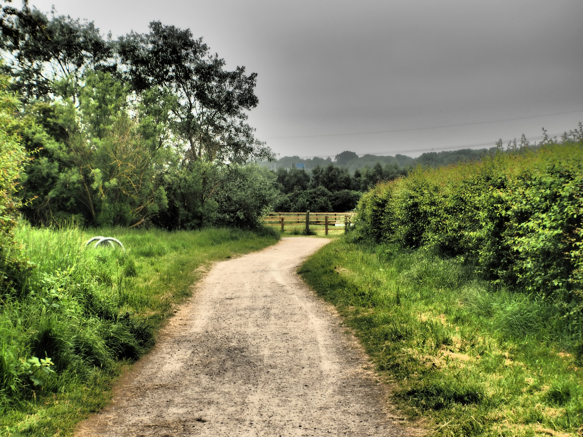 A path in the Conservation area by Terence Quinn