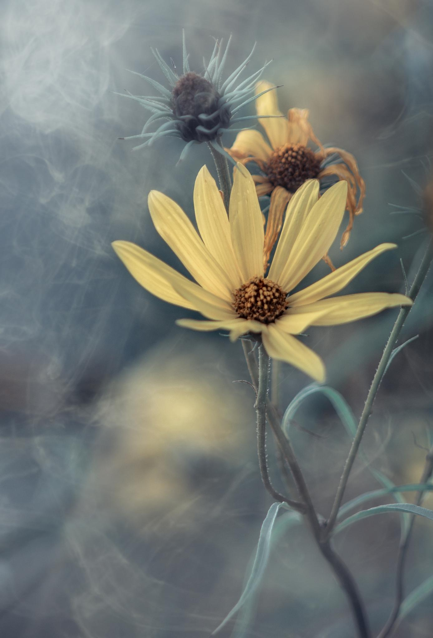 on a foggy day by Michael Wipperfürth