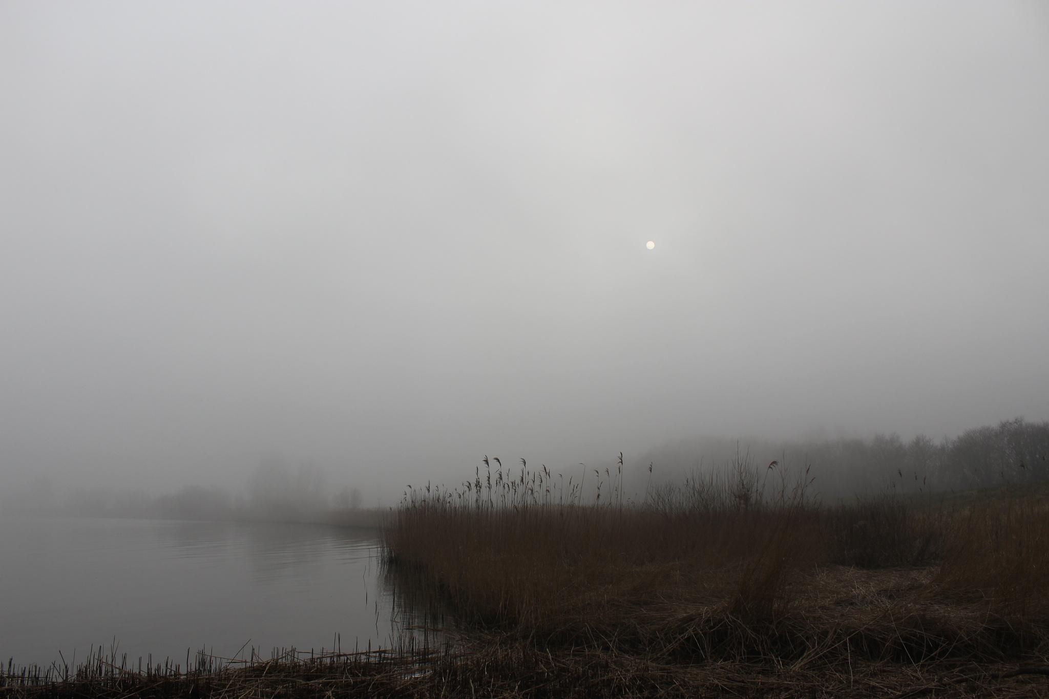 Misty Morning Den Oever by Sietze Buurma