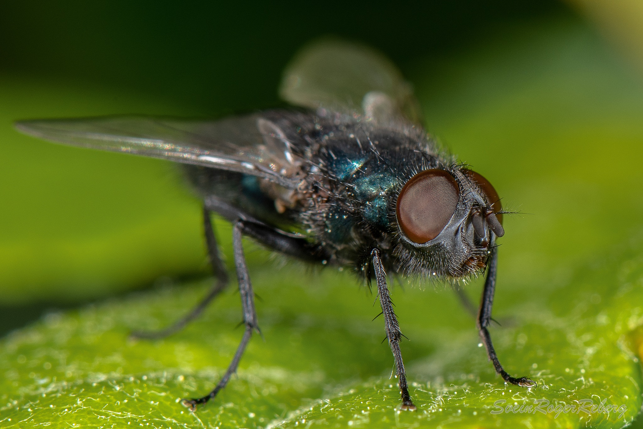 A fly by Svein Roger Reberg