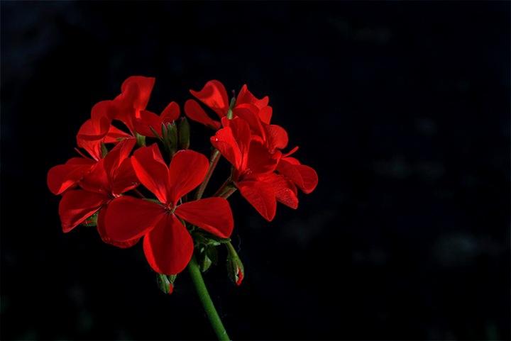 flower by Andi Nugroho Pambudi