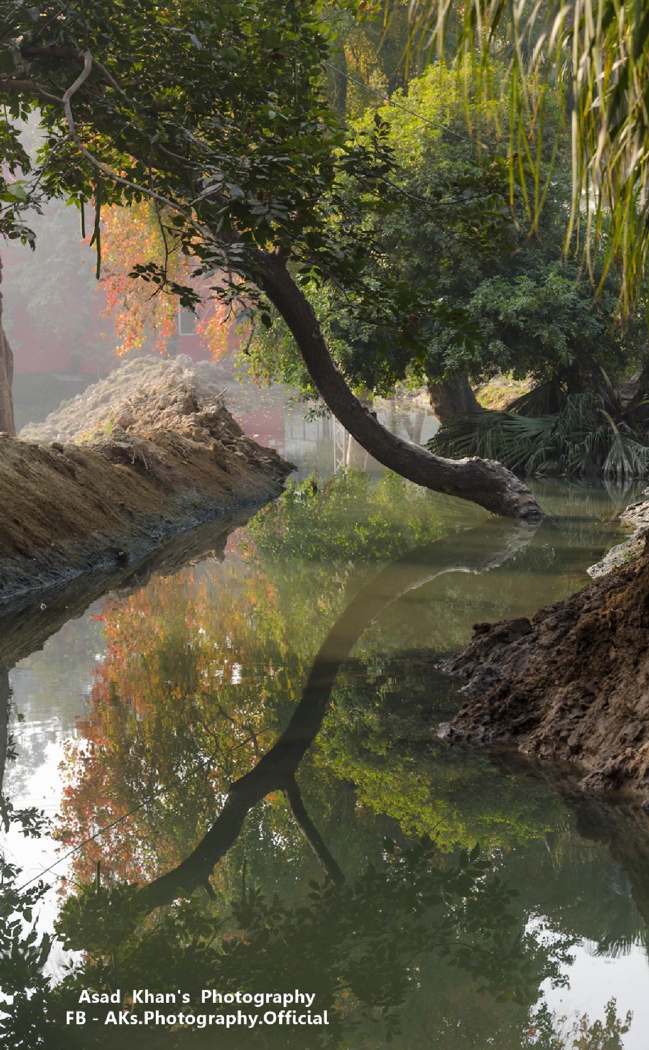 Reflection by Muhammad Asad Khan
