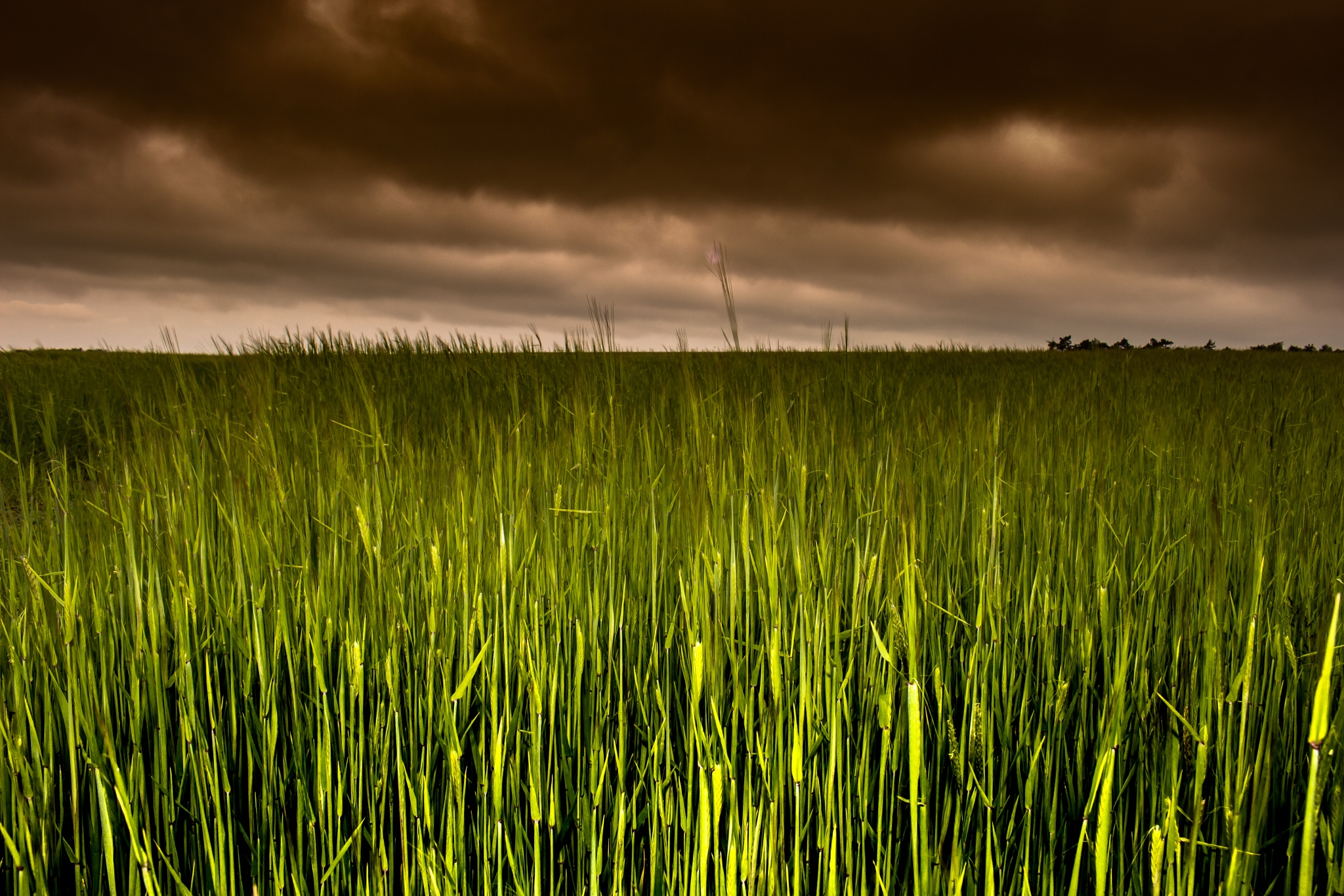 Photo in Landscape #grass #wheat #field #cloud #lightroom #sky #horizon #green #dark #moody #bright #colour