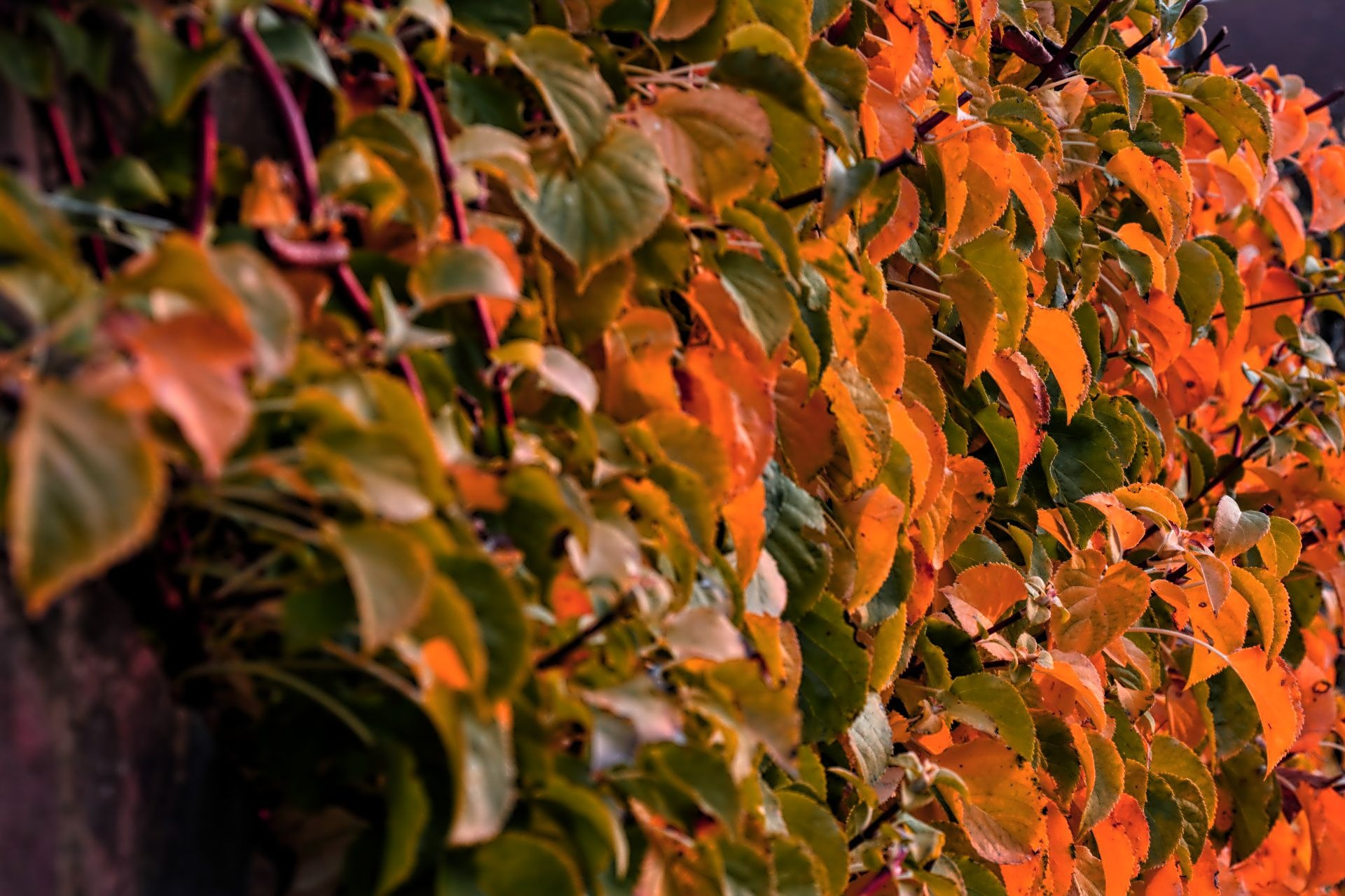 colourful leaves by ianstandivan