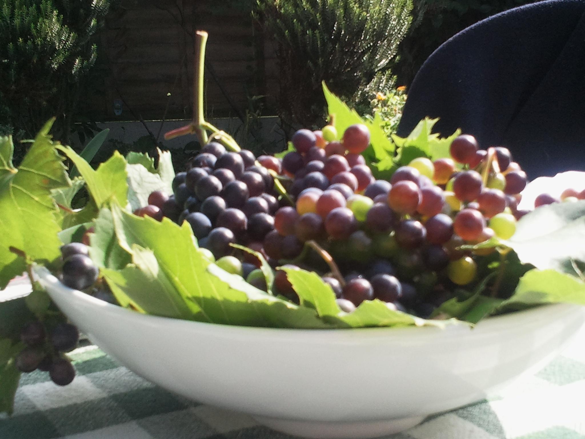 Harvesting by Reyhan K-Luttman