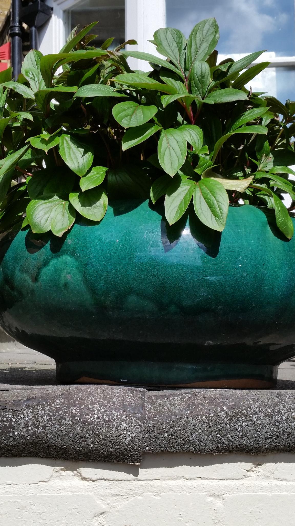 Green Pot by Reyhan K-Luttman