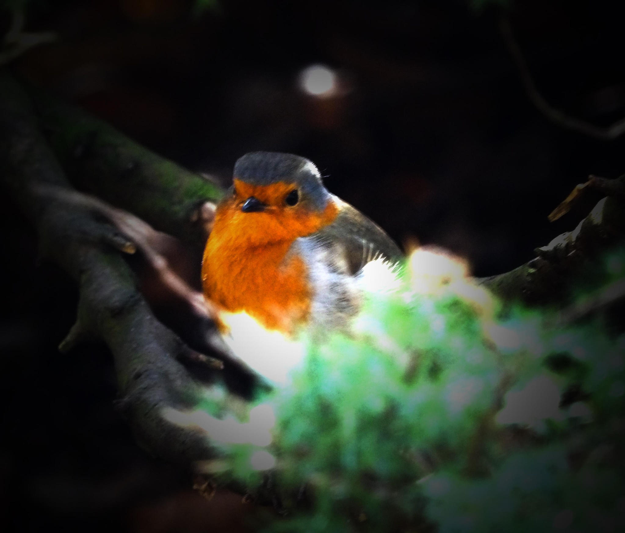 Robin being very playful Today by chrispic