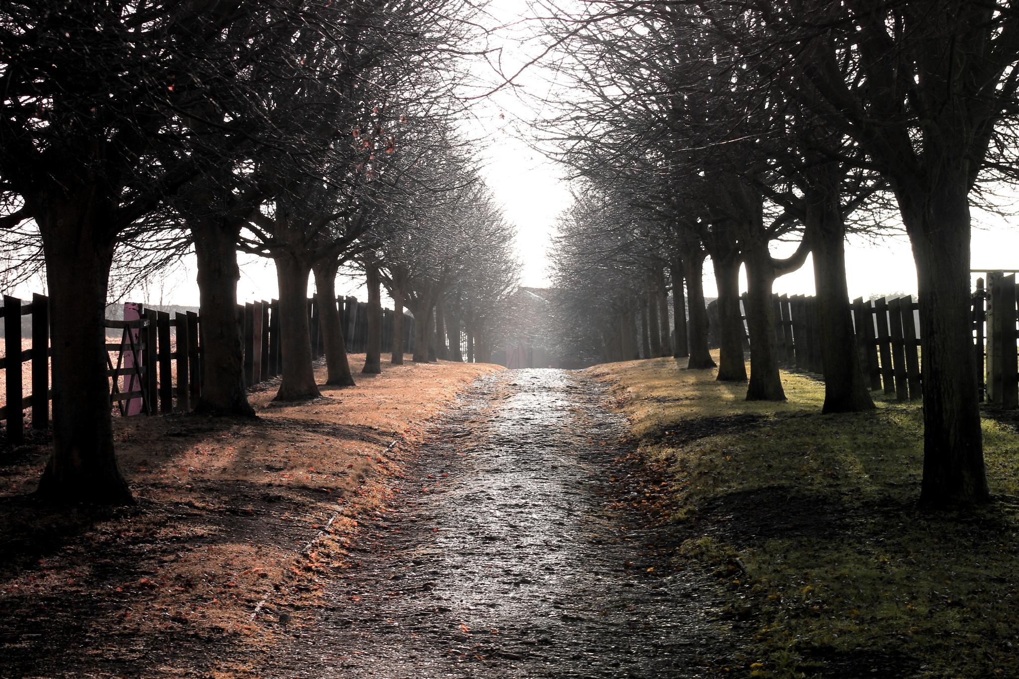 Rural lane by Lsb23