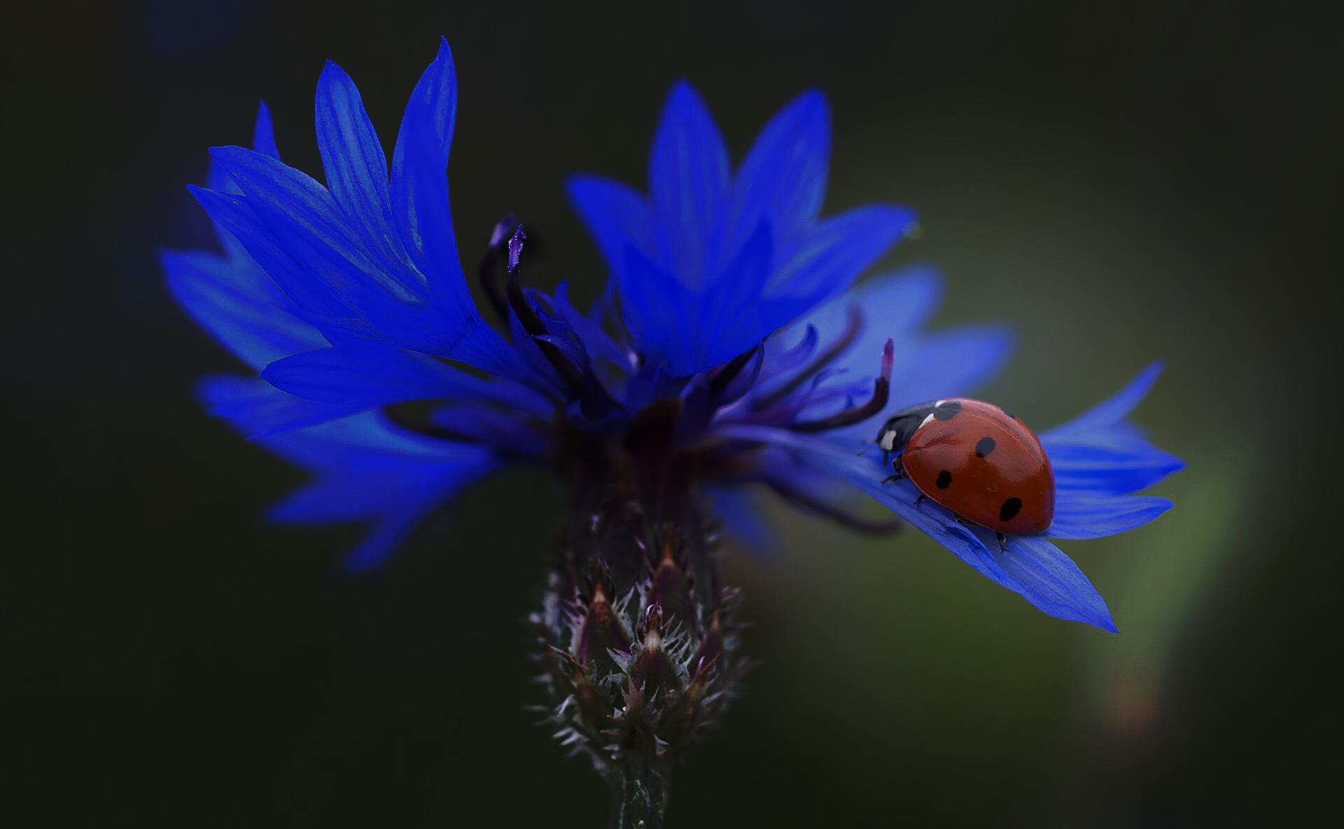 Ladybird by Lsb23