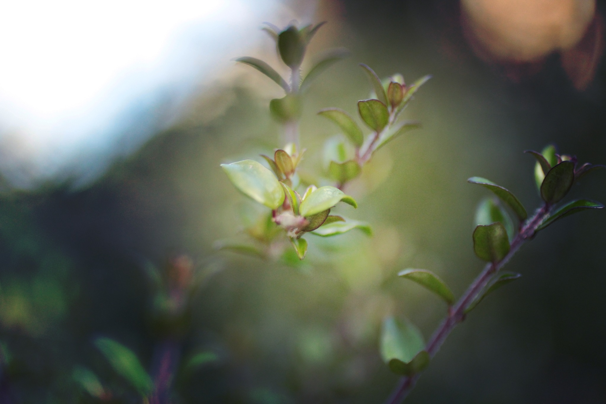 Green leaves by Lsb23