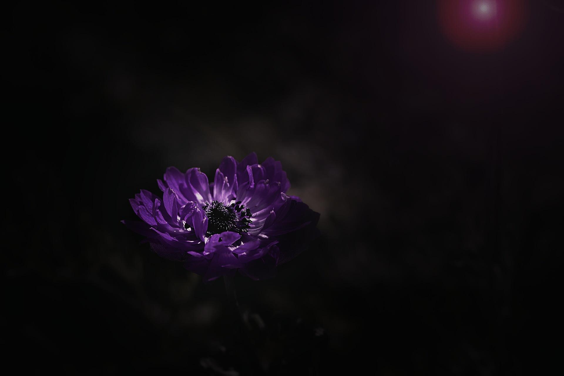 Anemone  by Lsb23