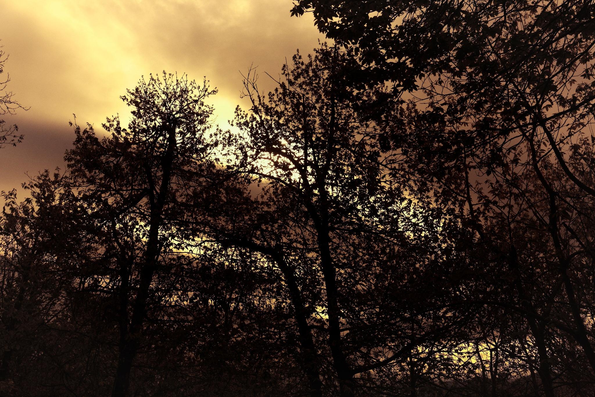 Photo in Nature #fire #backlight #sun #trees #light #canon