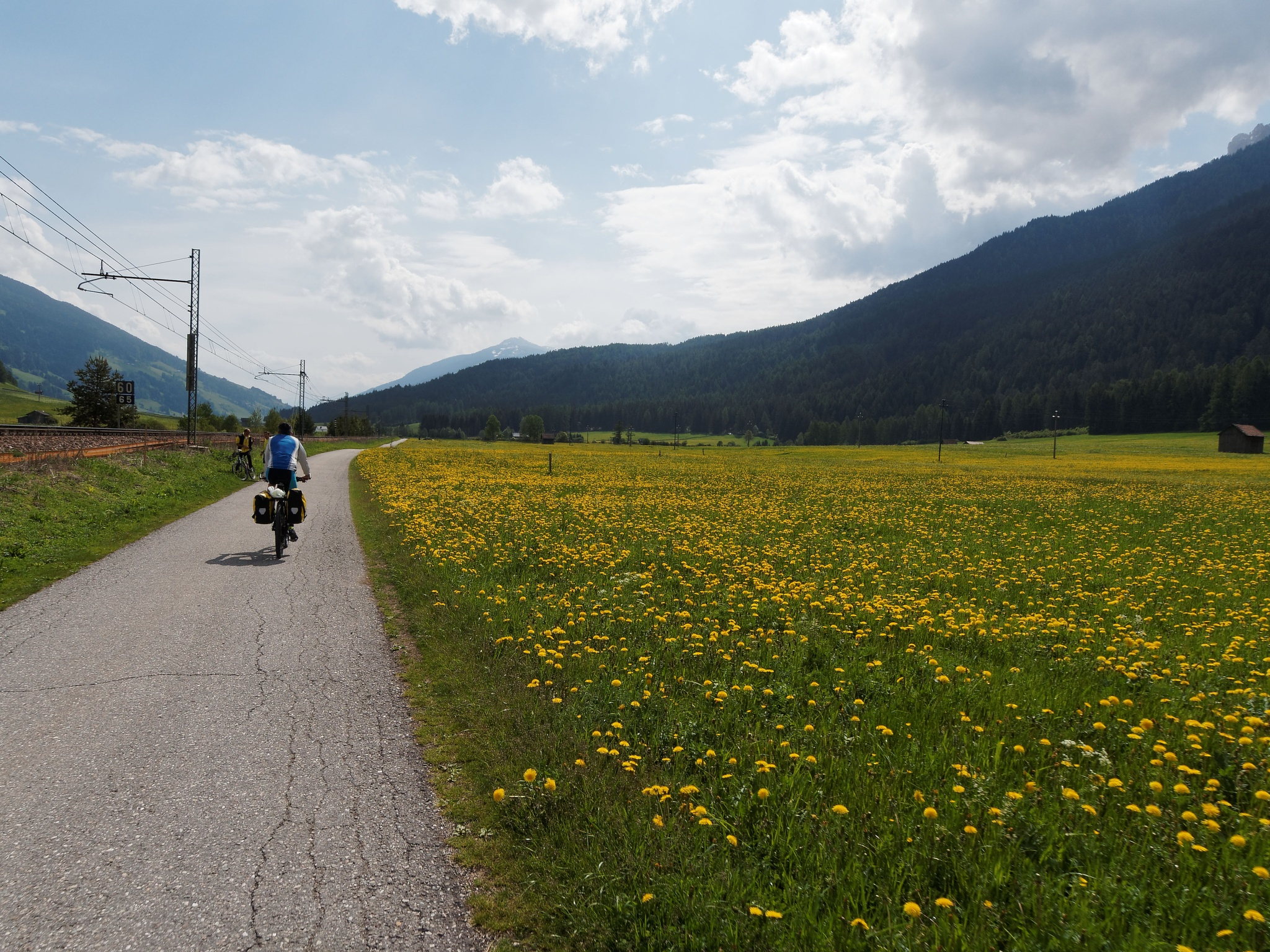 Flowers cycle path by Andrea Zork Abbà