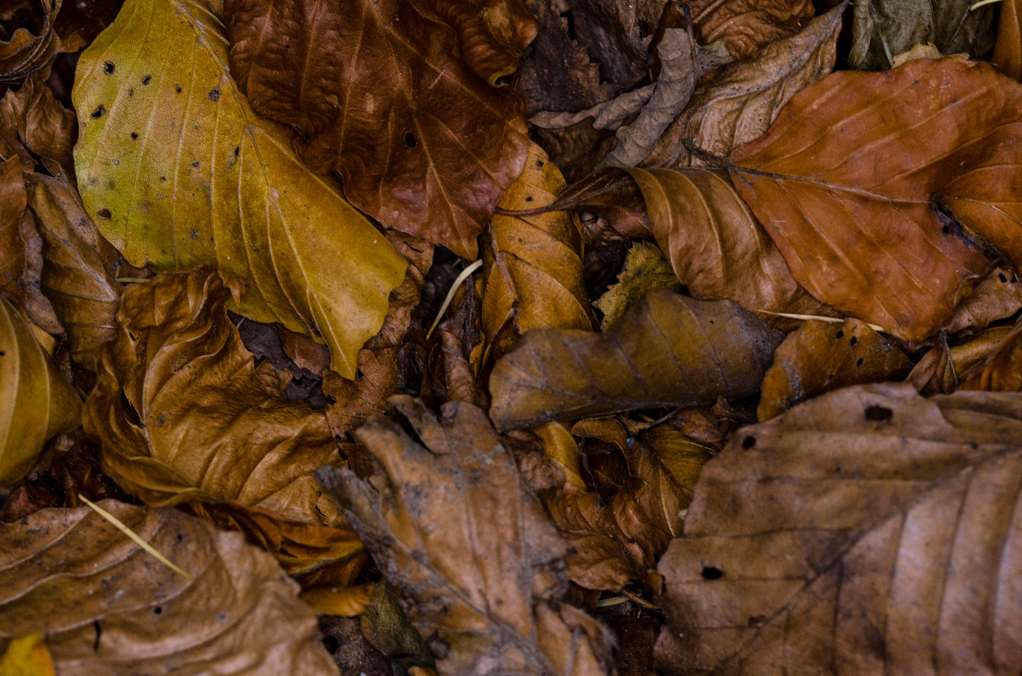 Autumn Colours by David Taylor