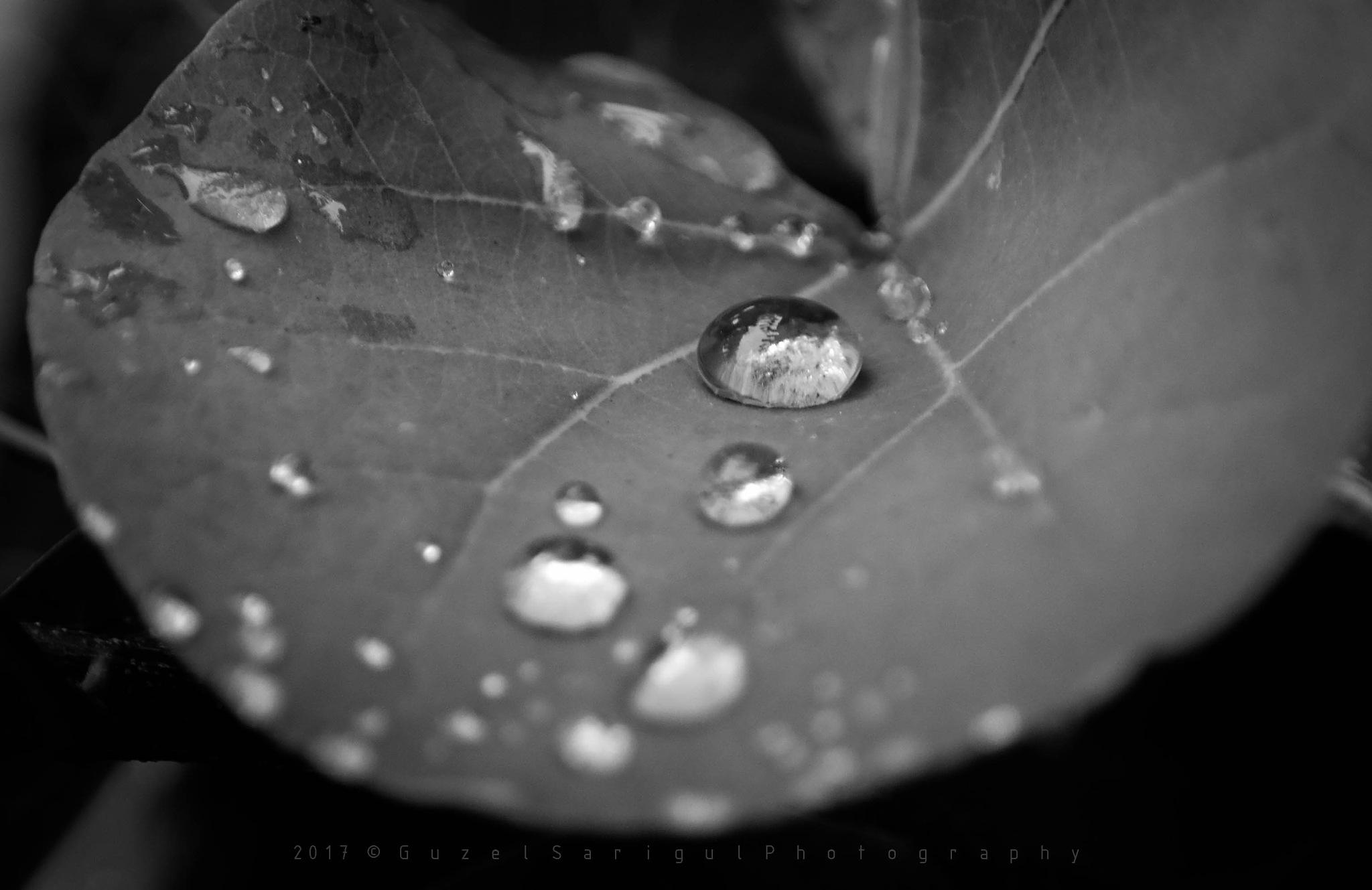 The rain.. by Guzel Sarigul