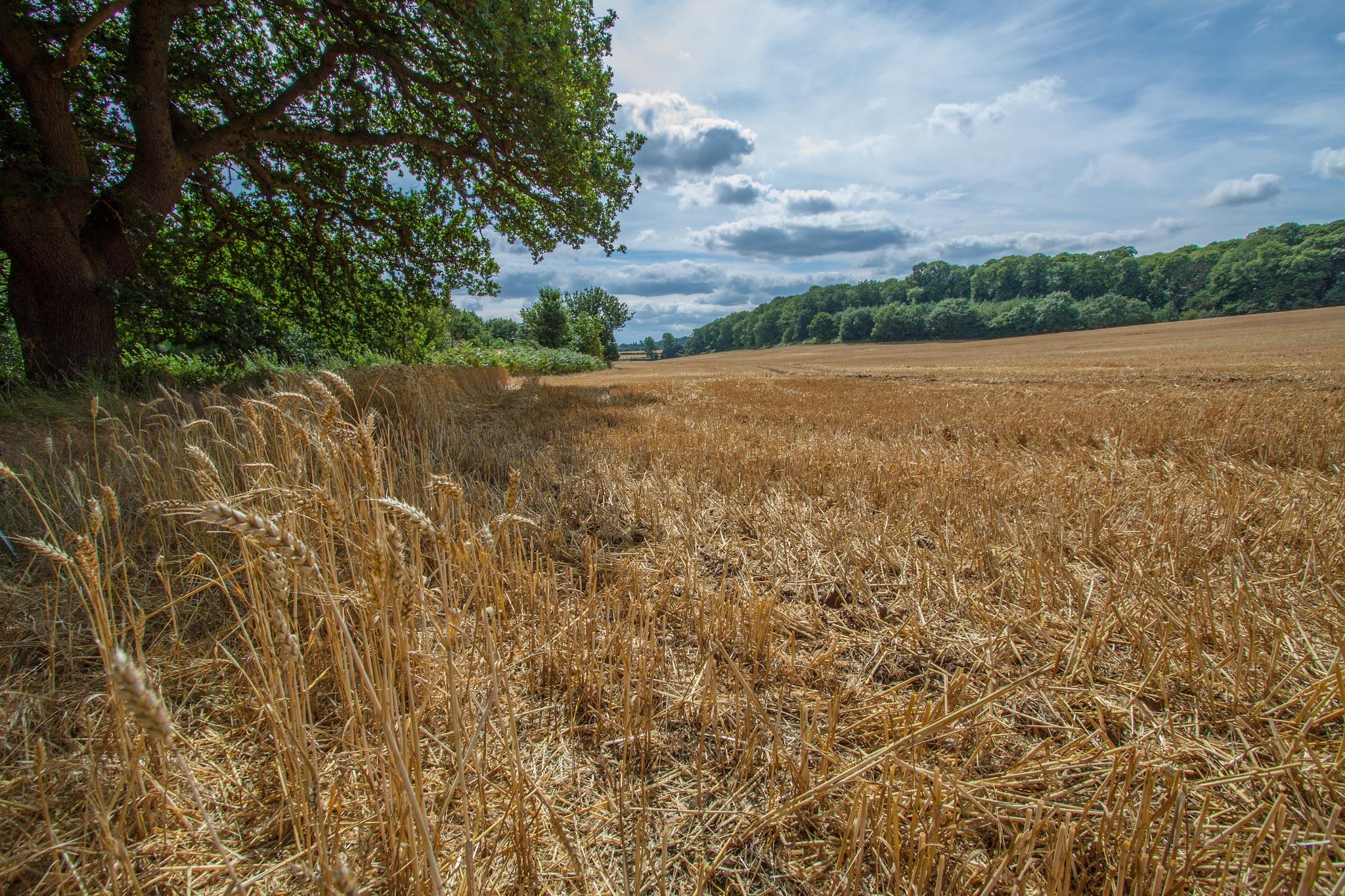 After the harvest by Jeremy Tilston