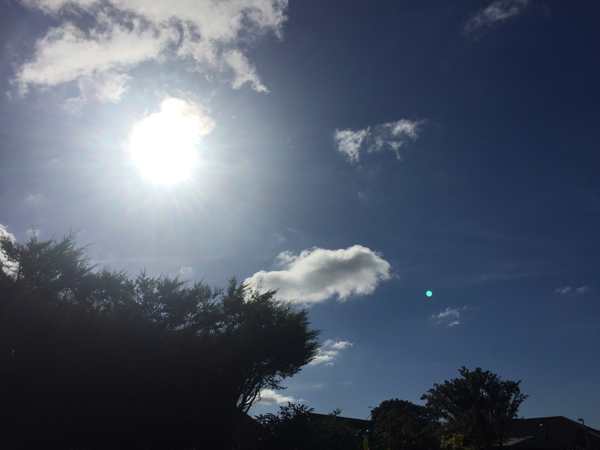 Midday sun! by Amanda McGeehan