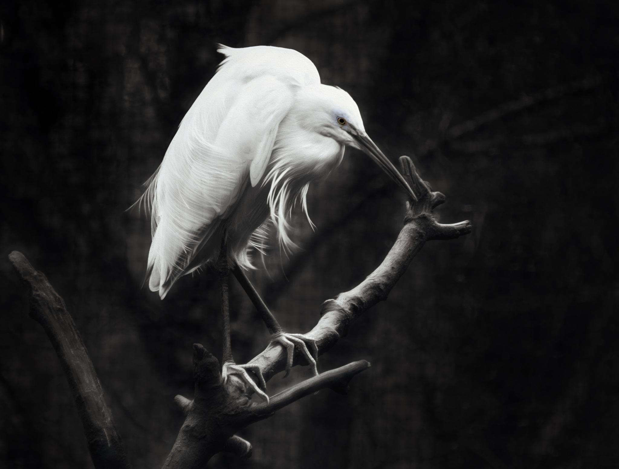 Wetlands by GaryCorken