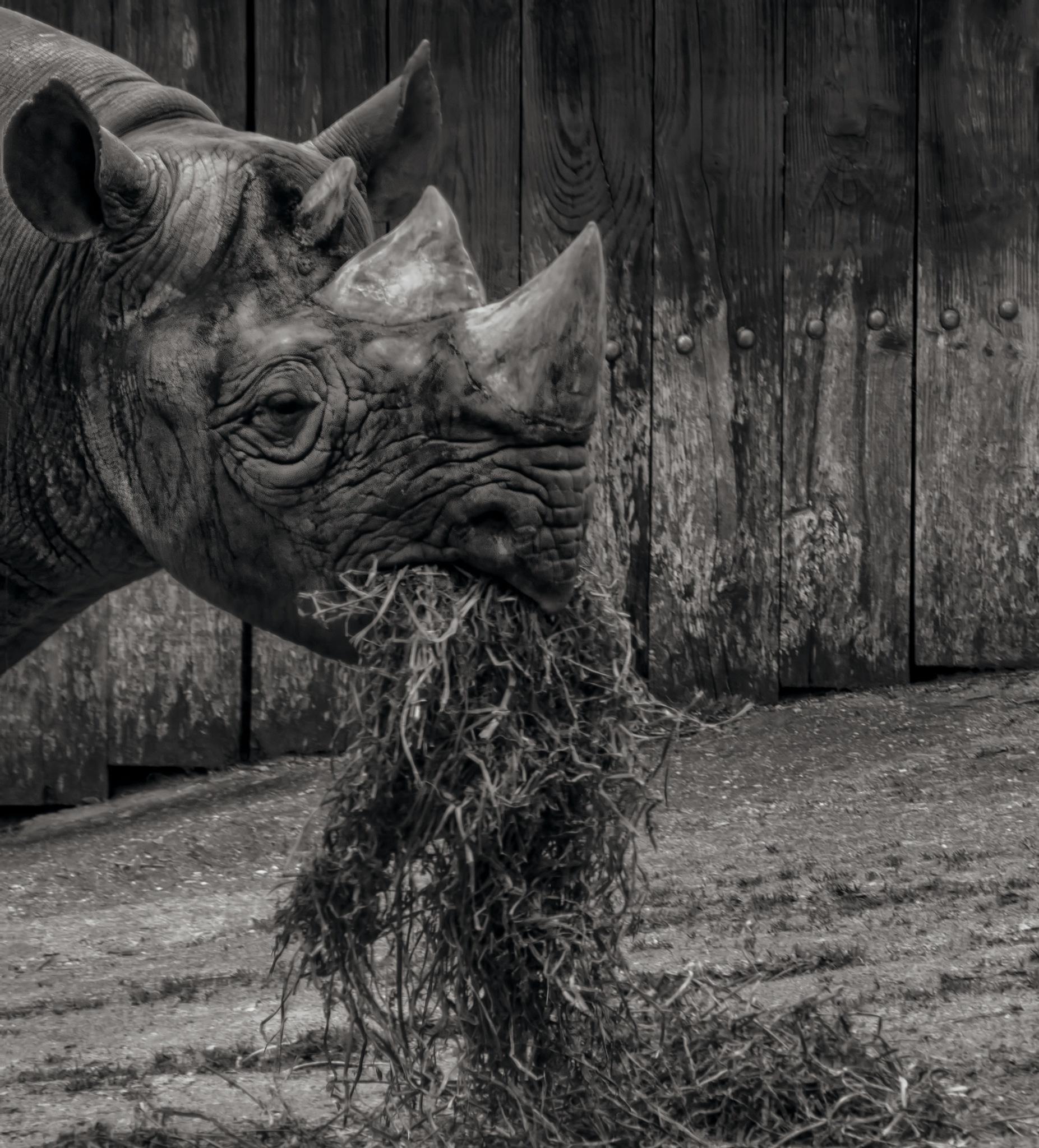 Rhino by GaryCorken