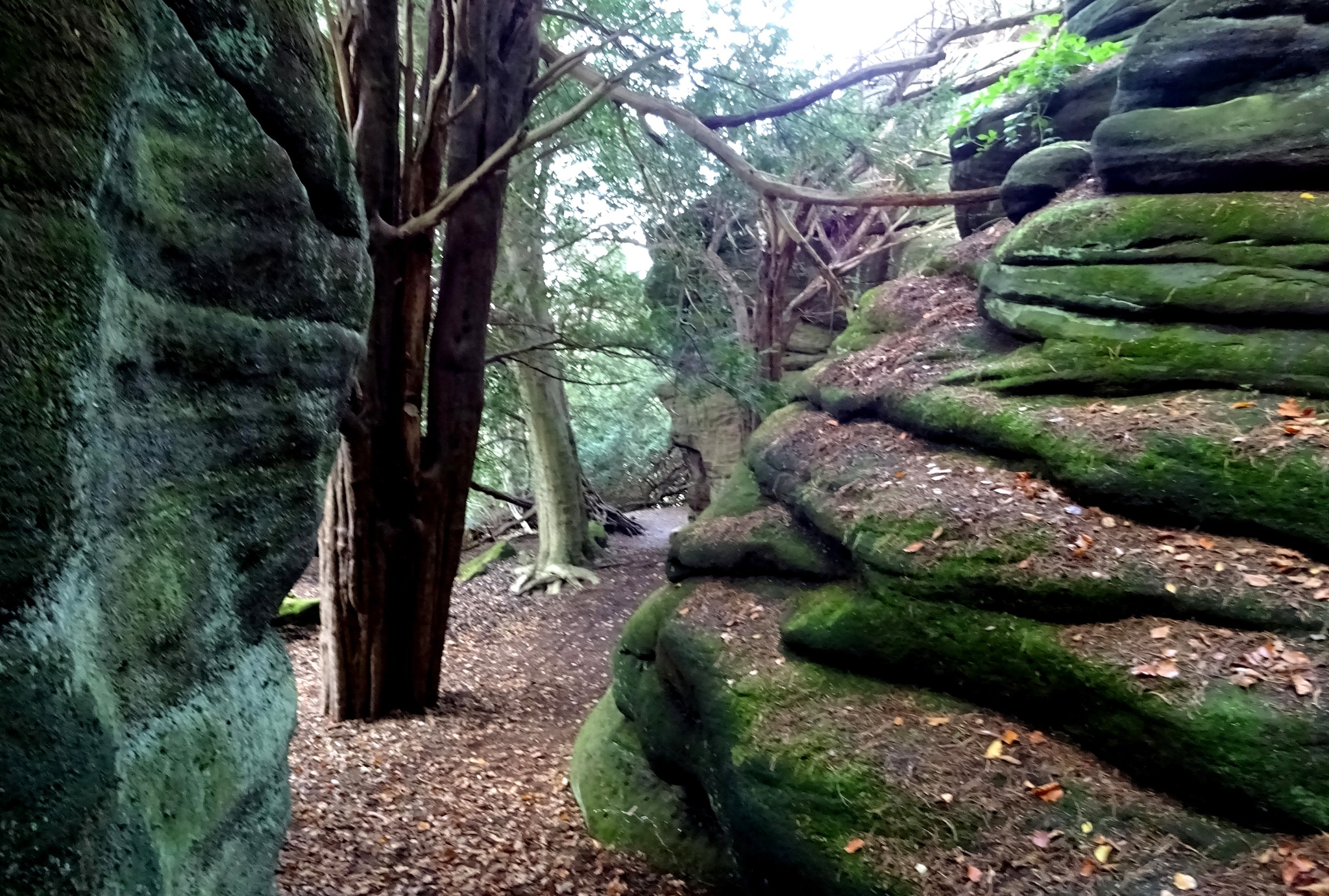 Plumpton Rocks, Yorkshire. by kayThornton