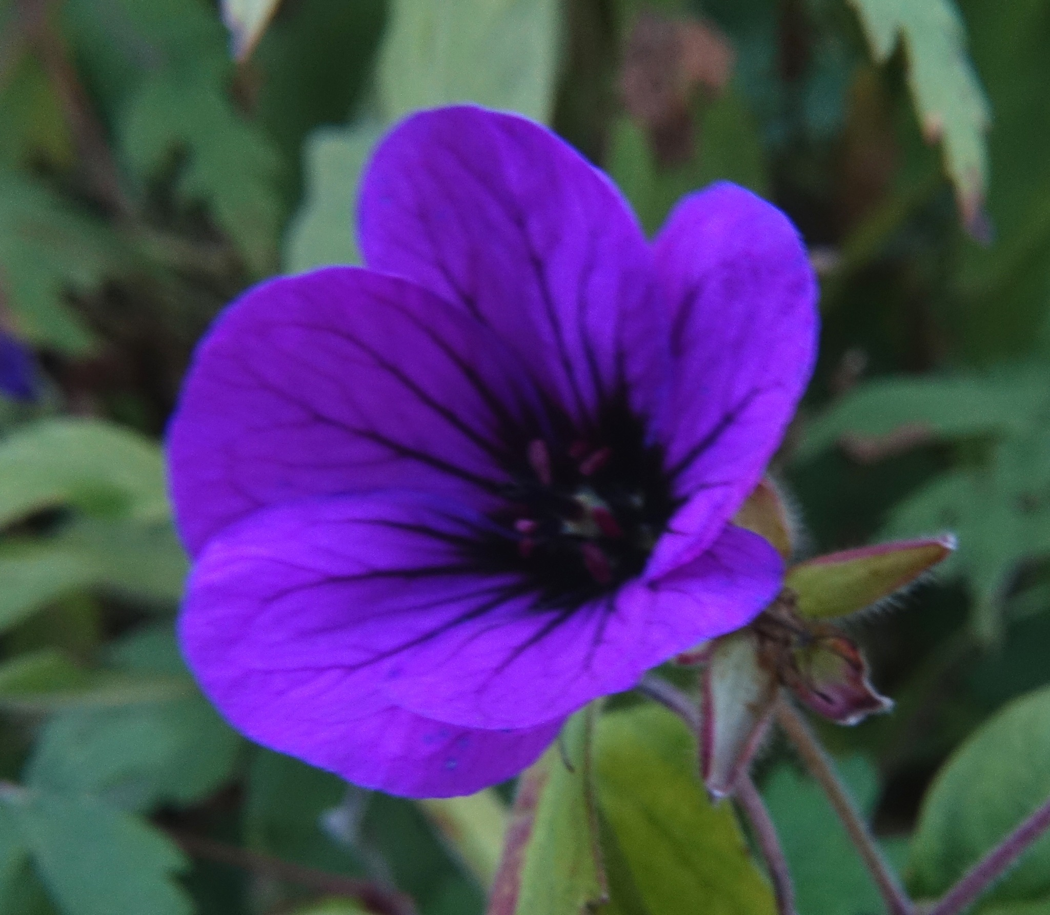 Purple by kayThornton