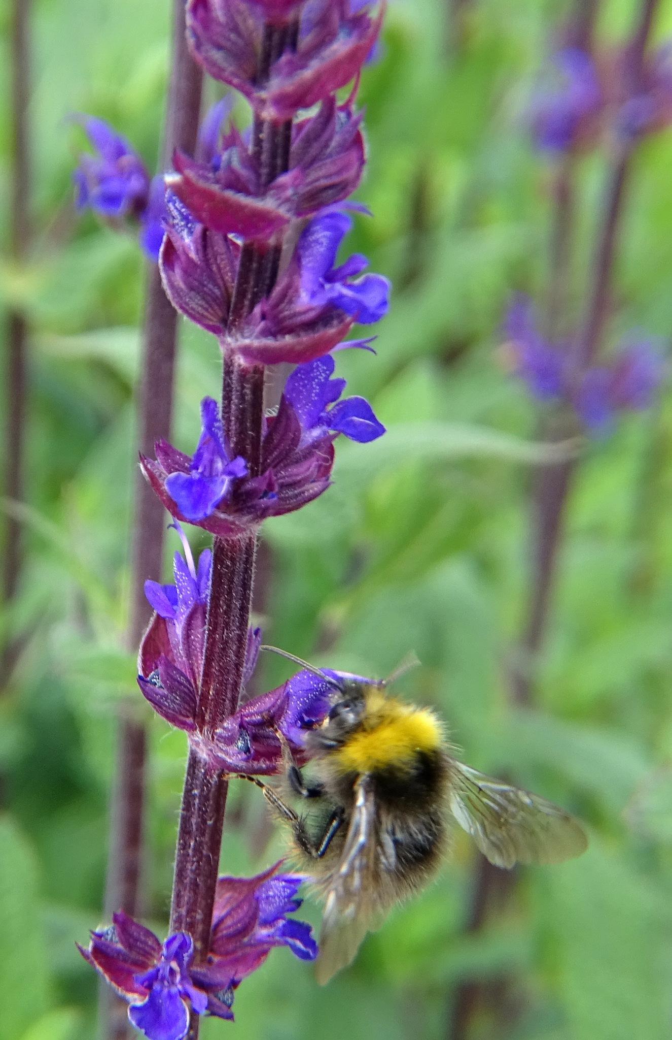 Bee....autiful. by kayThornton