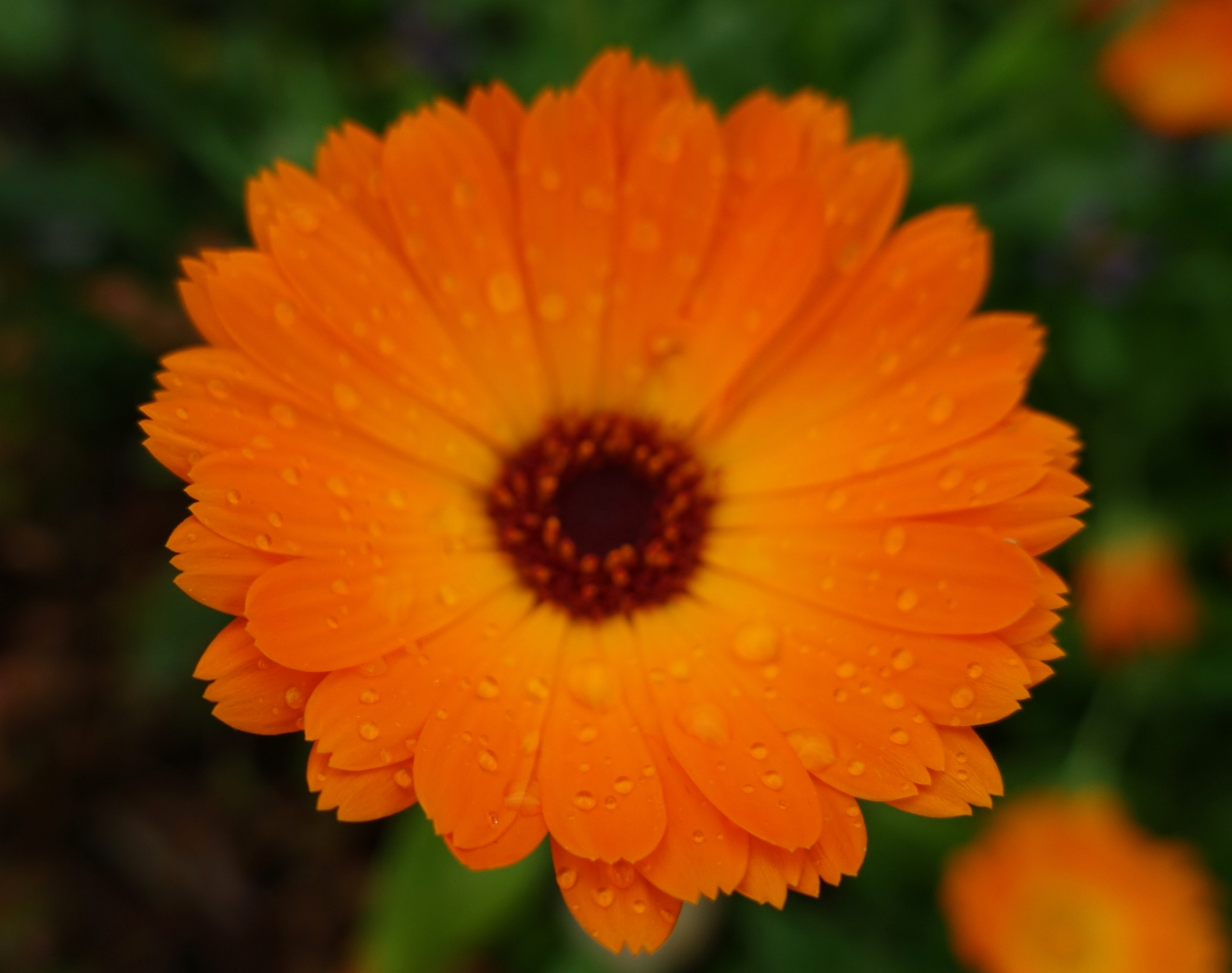 Summer Flowers on a Wet Summers day by kayThornton