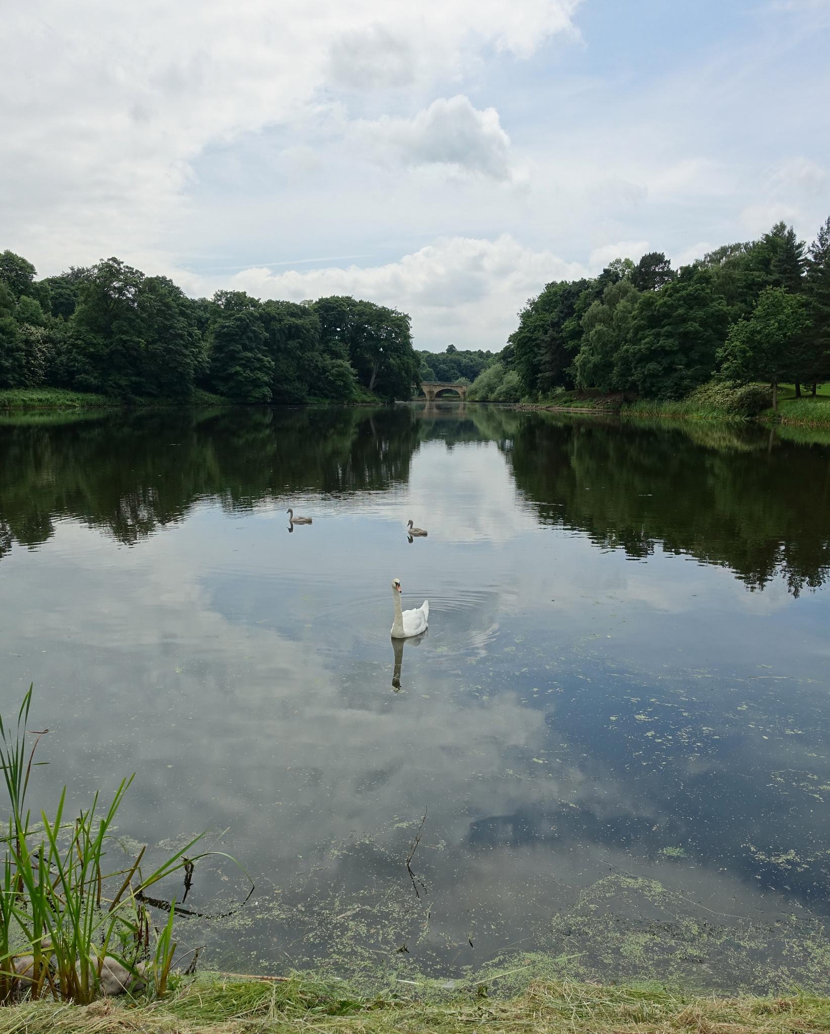 Swan lake by kayThornton