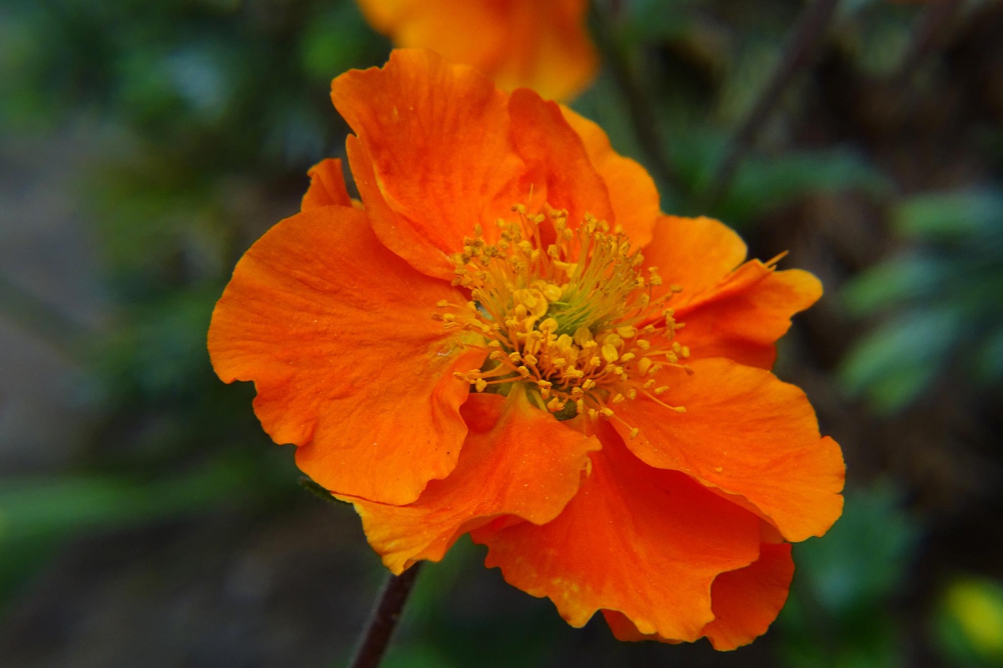 Orange. by kayThornton
