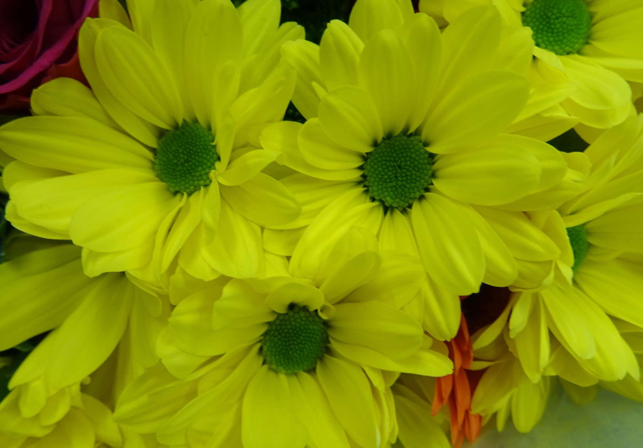 yellow and green by kayThornton