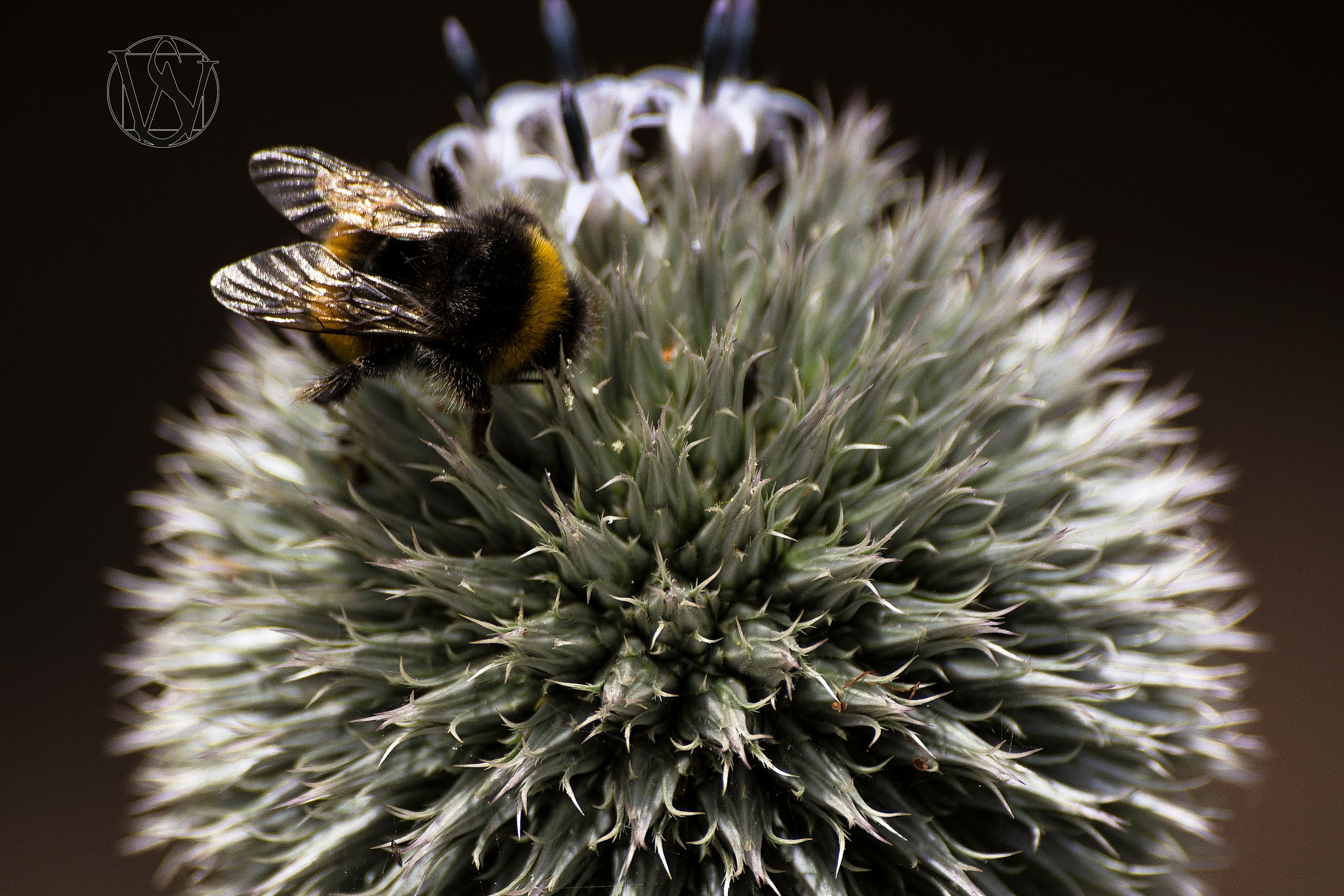 Buzz Off I'm Busy by David Drummond