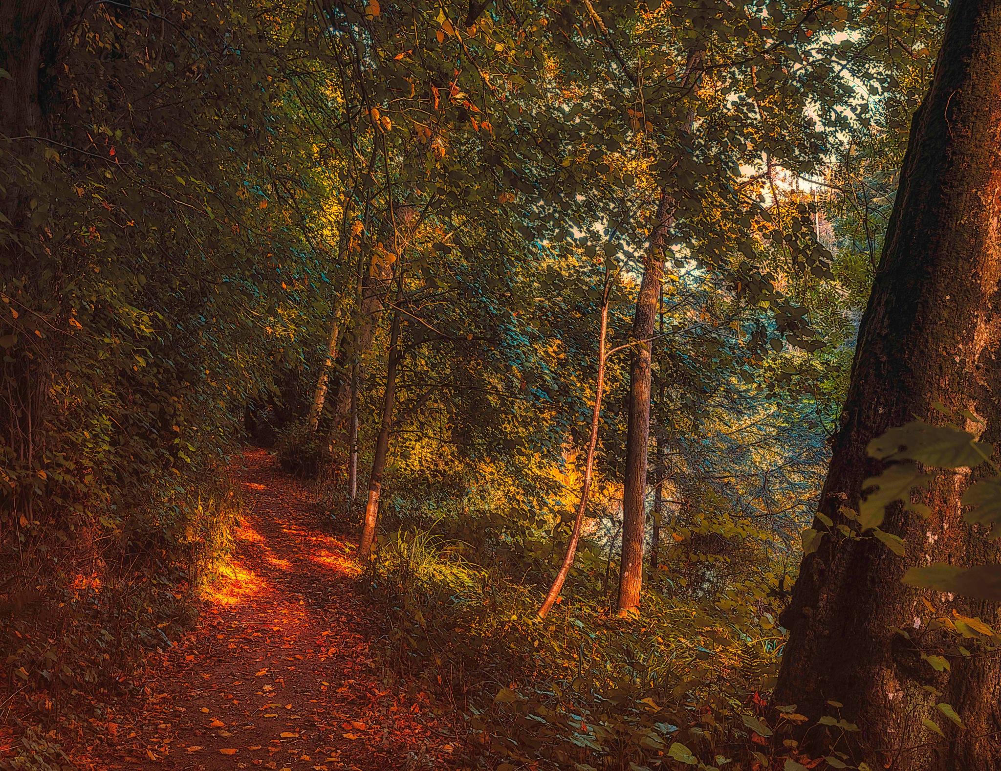 Autumn Path by David Drummond