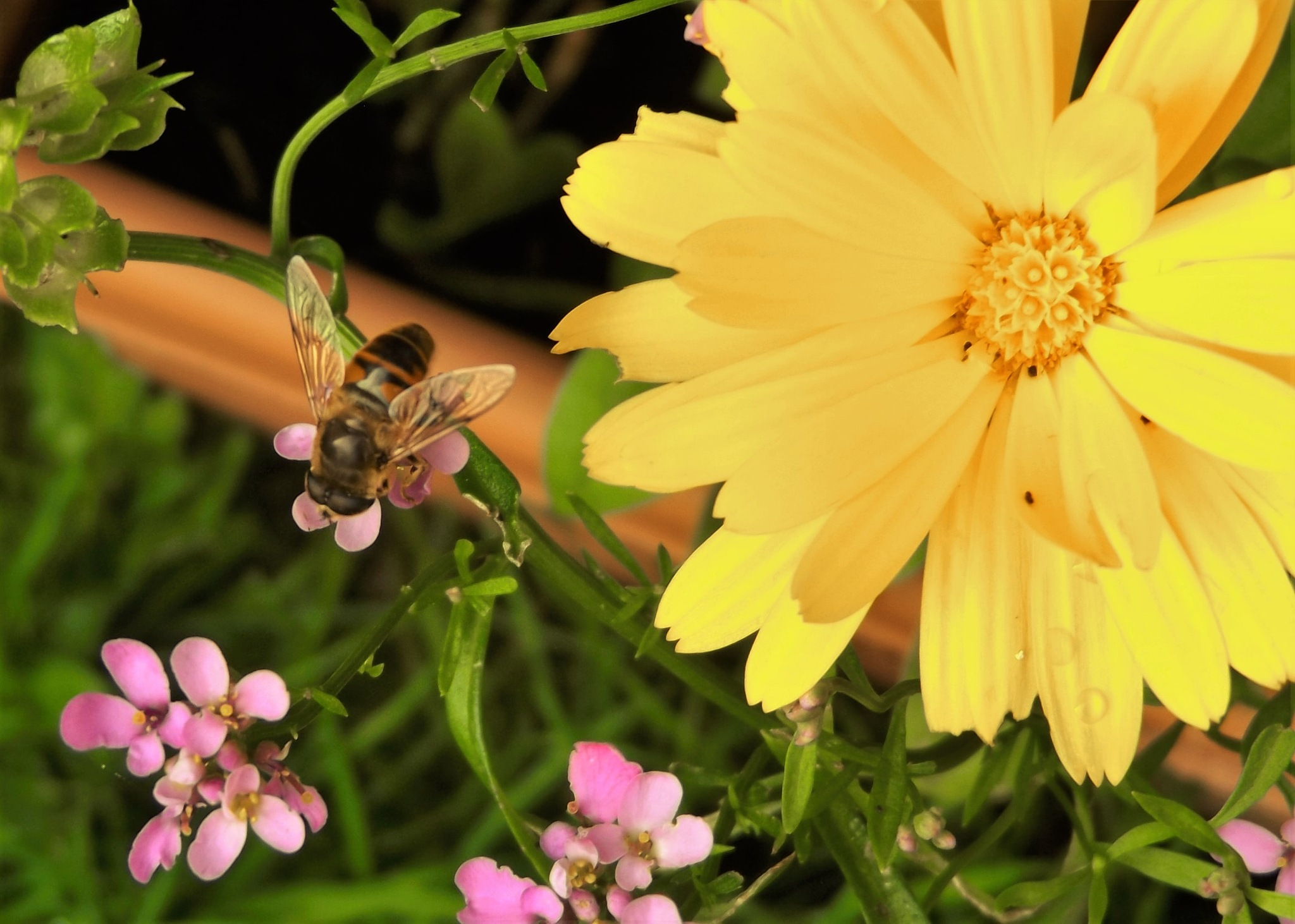 Flower and bee by Tracey Batchelor