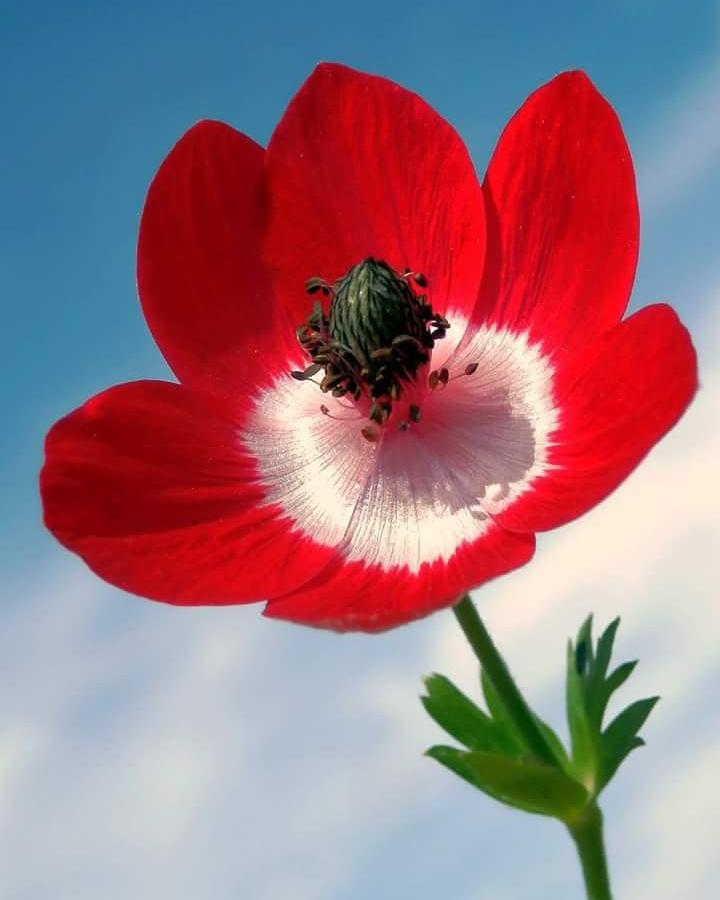 flower by Nuri Sağaltıcı
