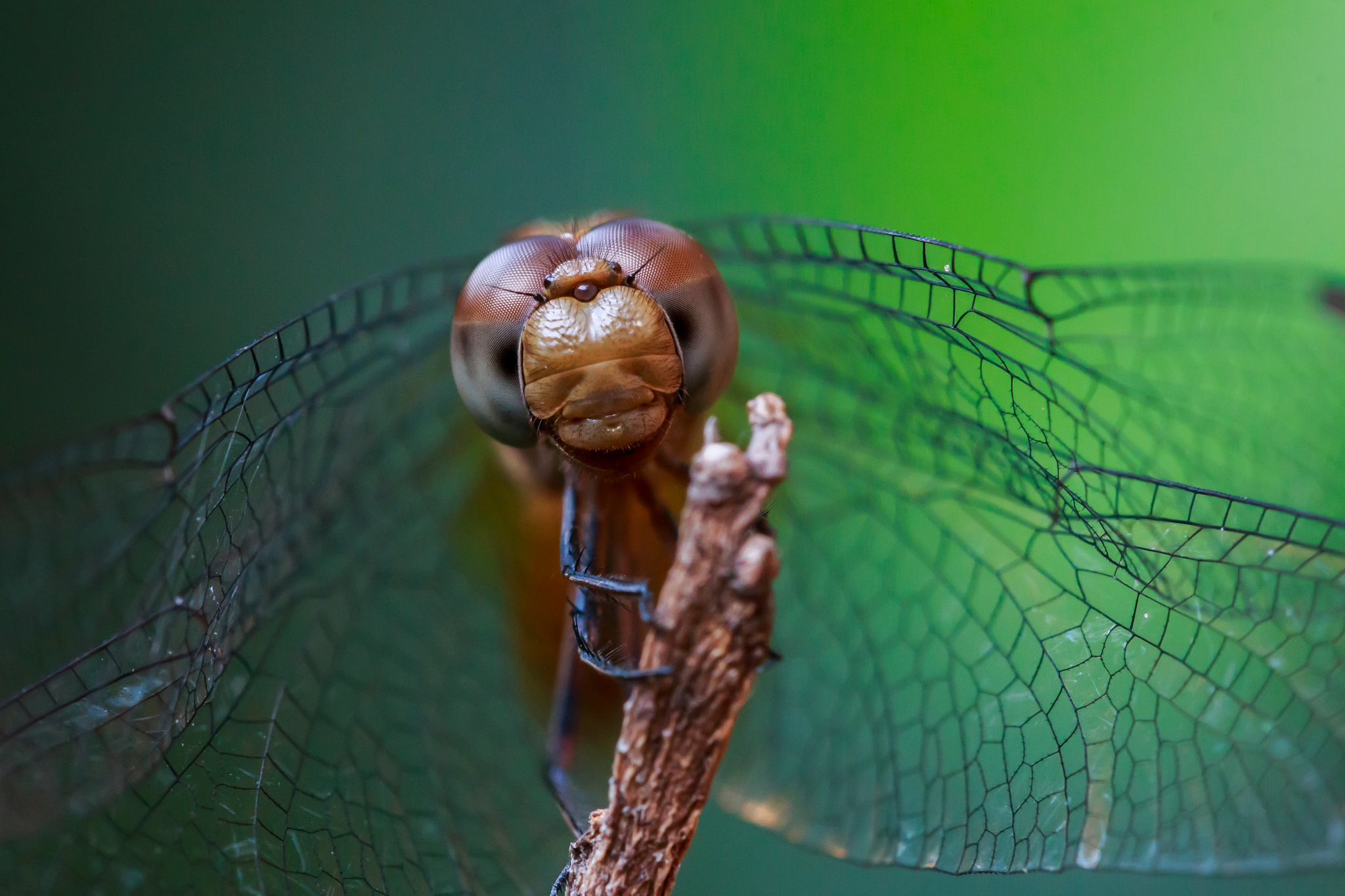Dragonfly by Sander Freitas