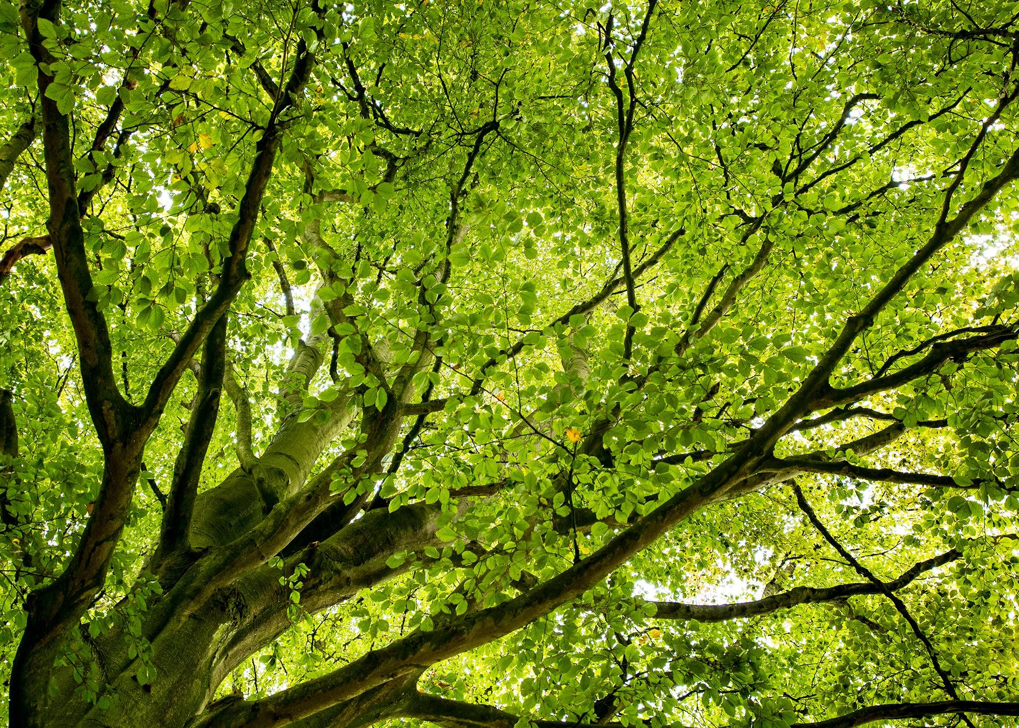 Tree by Ian M