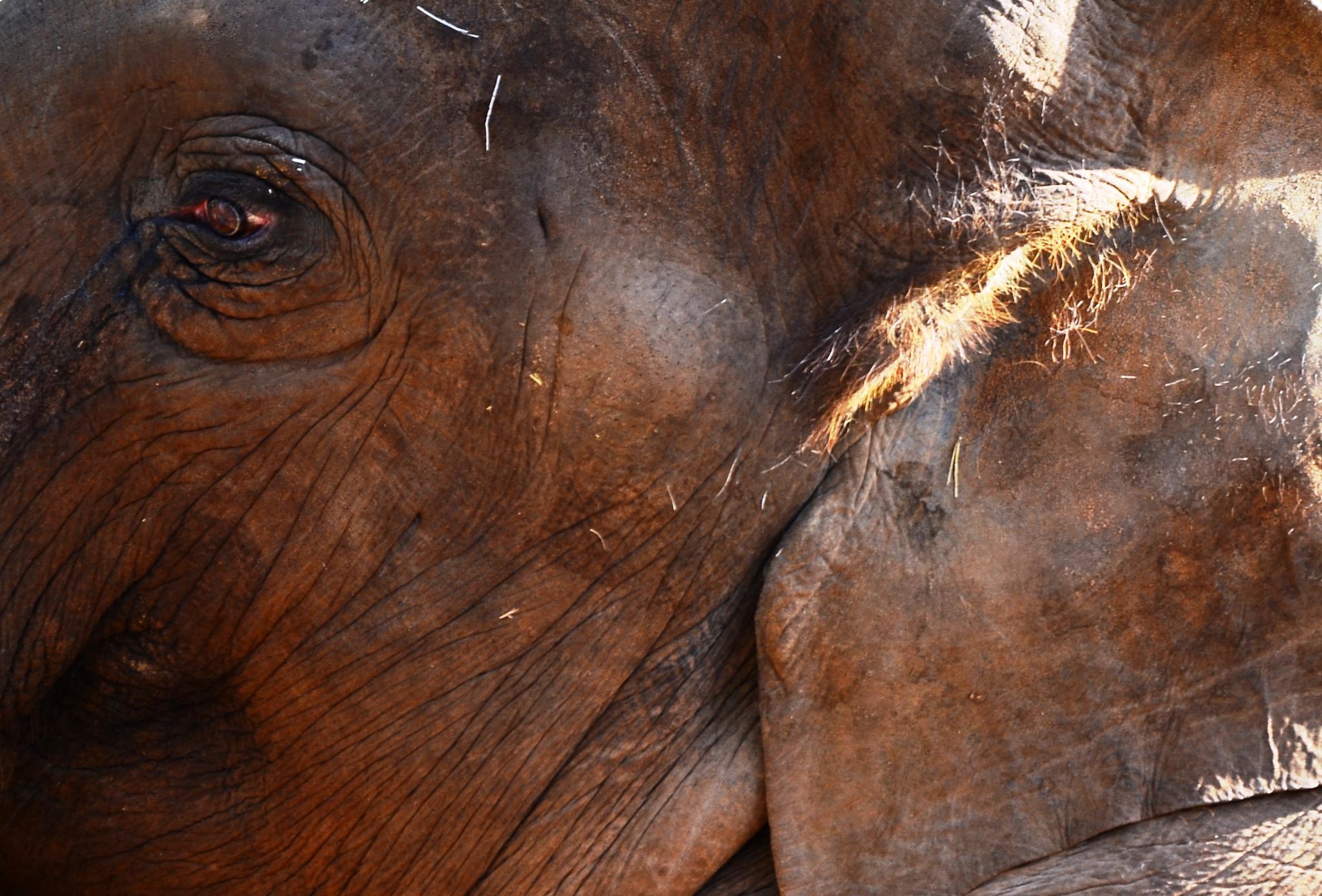 elephant by Emel Kıraç