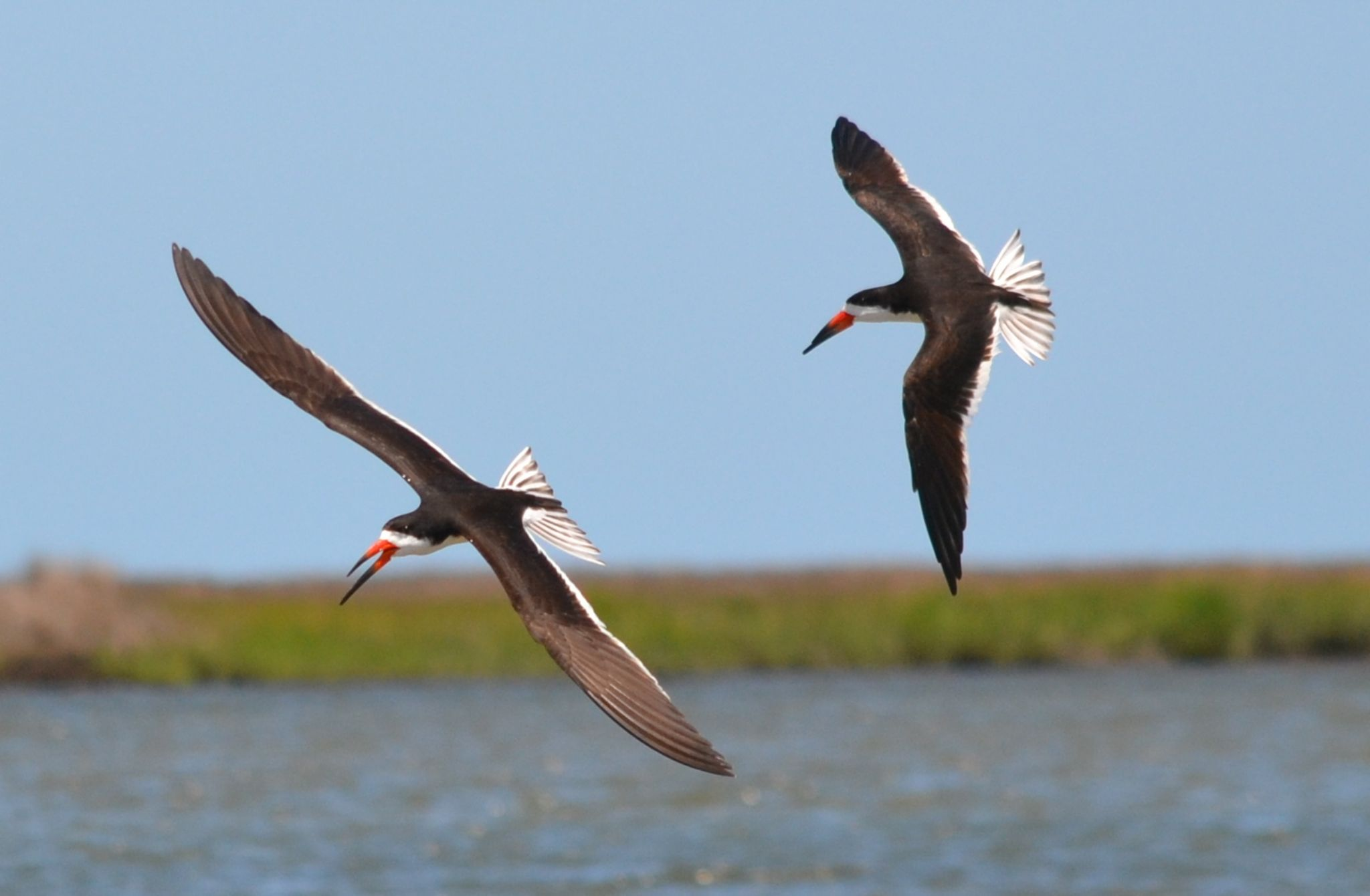 2 flying skimmers33 by jetskibrian