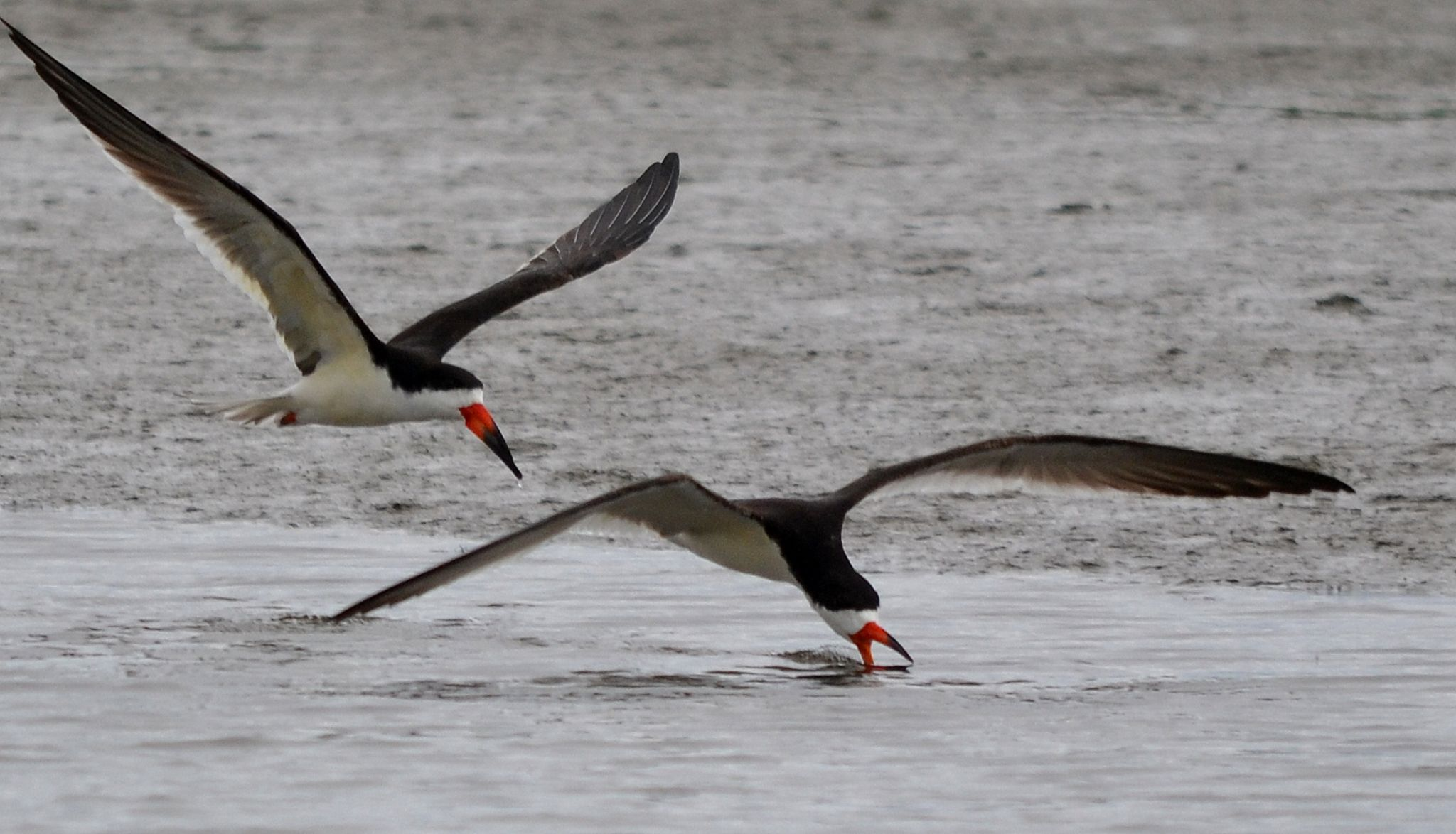 two skimmers 445 by jetskibrian