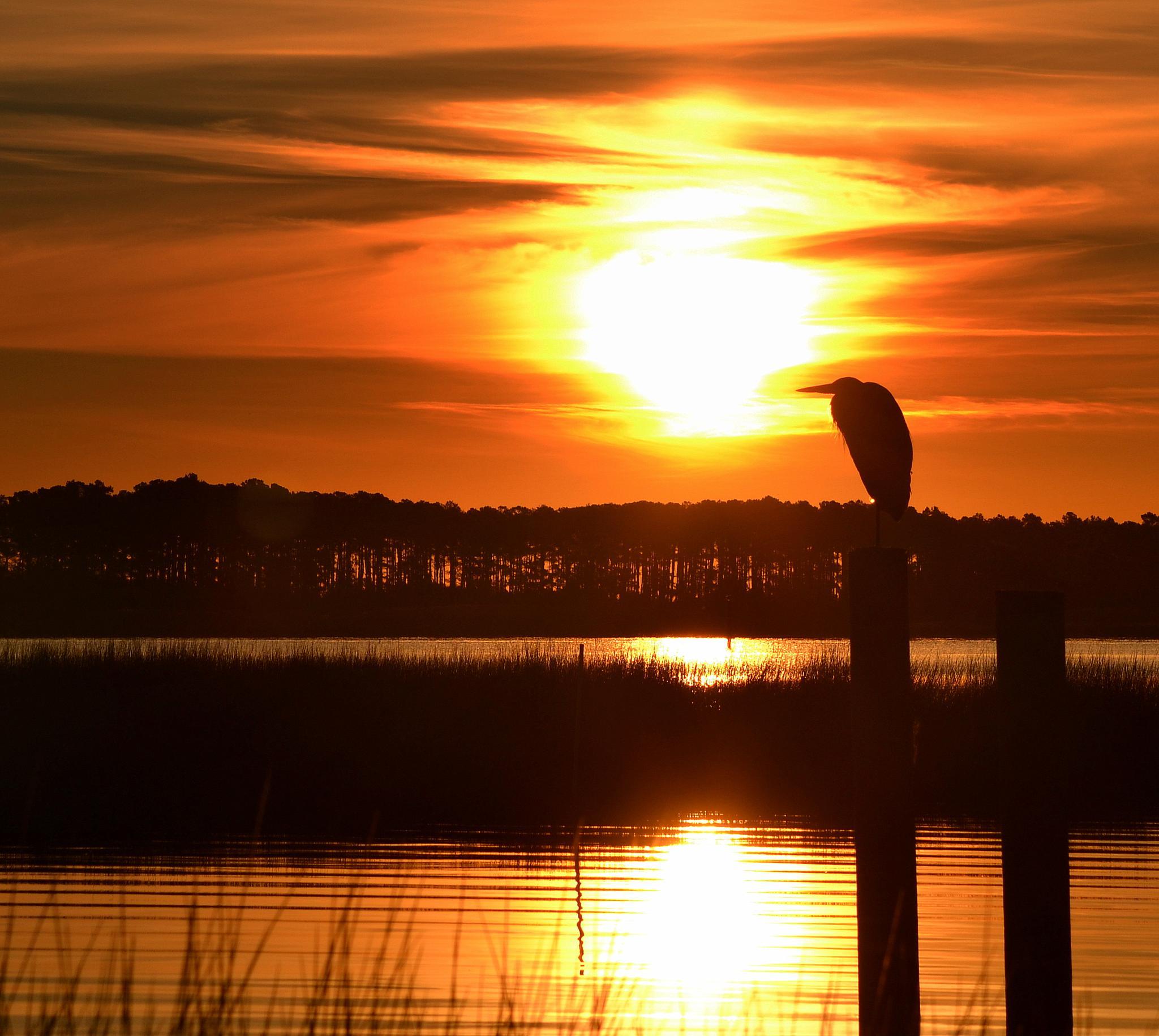 Sunrise Heron by jetskibrian