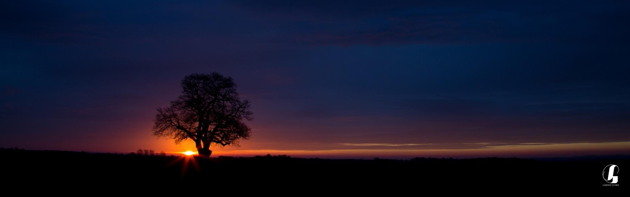 Sunrise Oak by Steve H