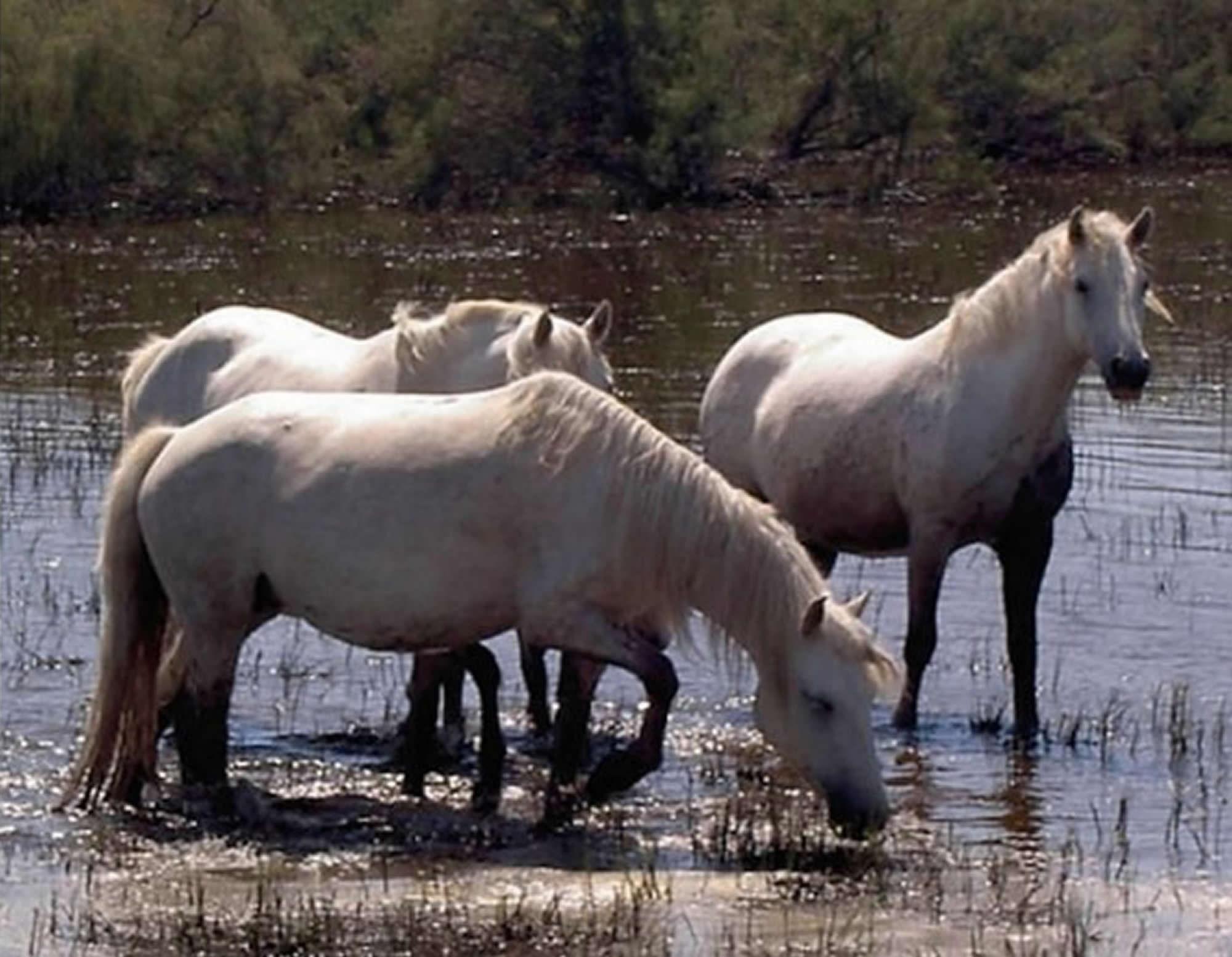 Horses by Silvey Bailie